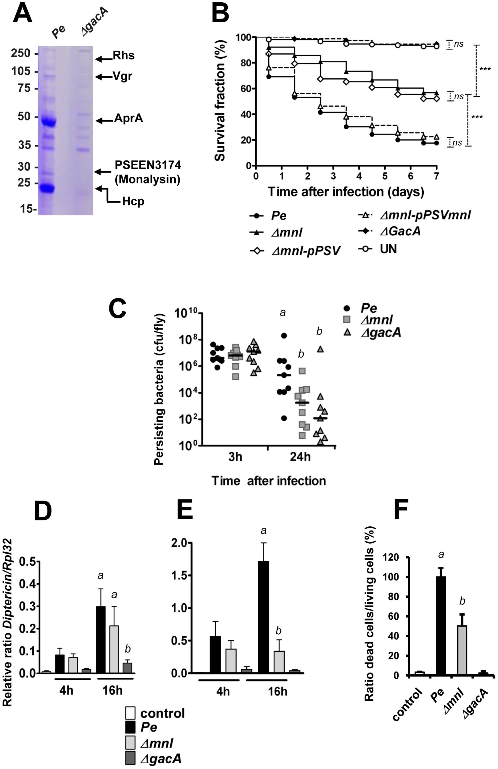PSEEN3174 encodes a secreted protein, Monalysin, required for <i>P. entomophila</i> virulence.