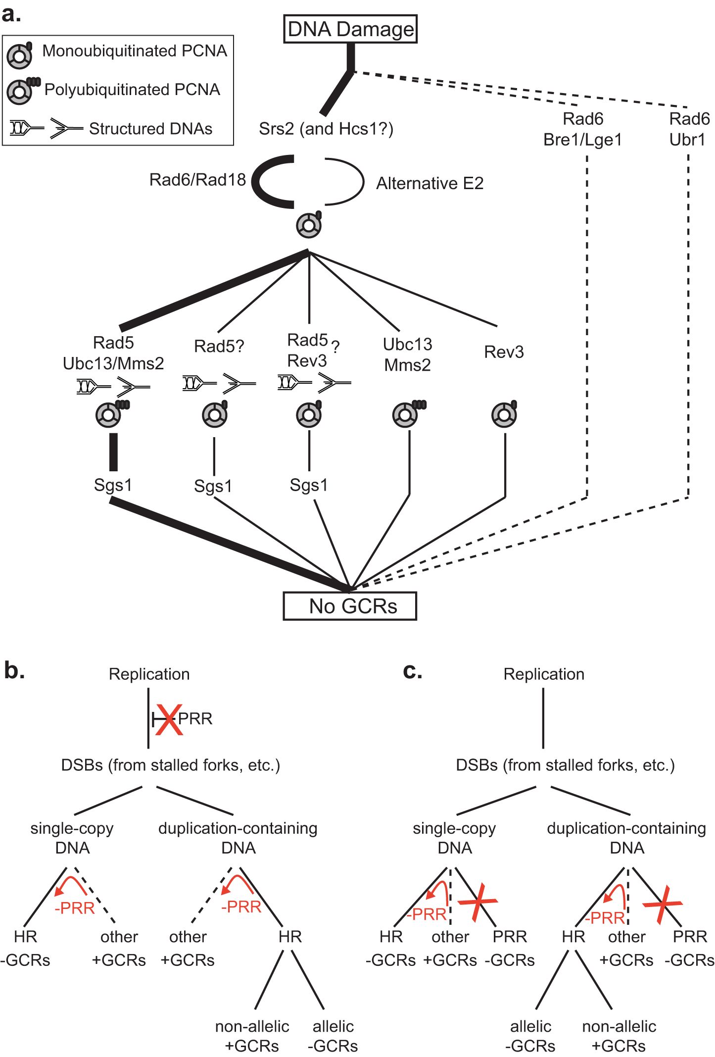 Models for the suppression of duplication-mediated GCRs by PRR.