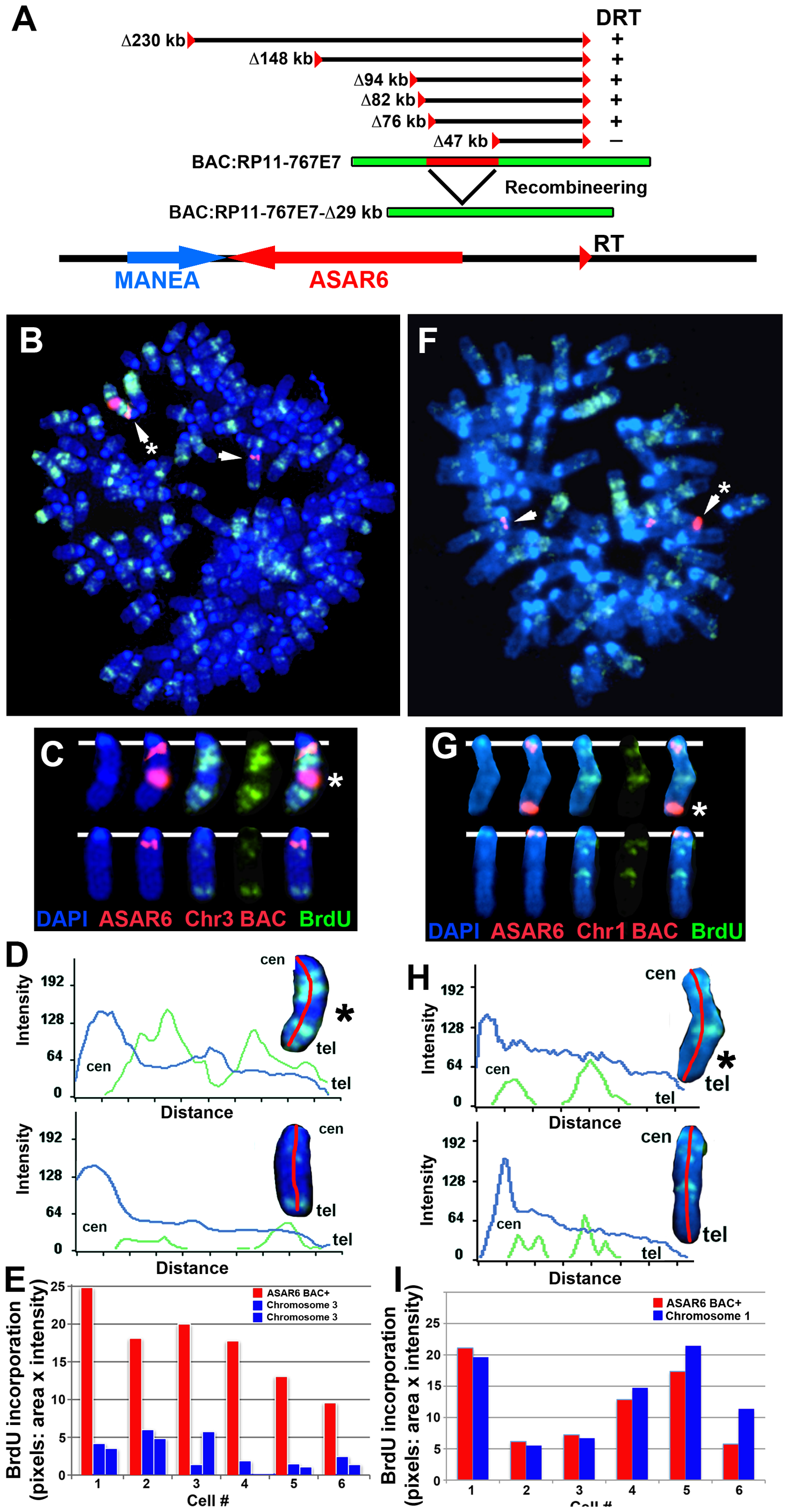Ectopic integration of <i>ASAR6</i> results in delayed replication of mouse chromosomes.