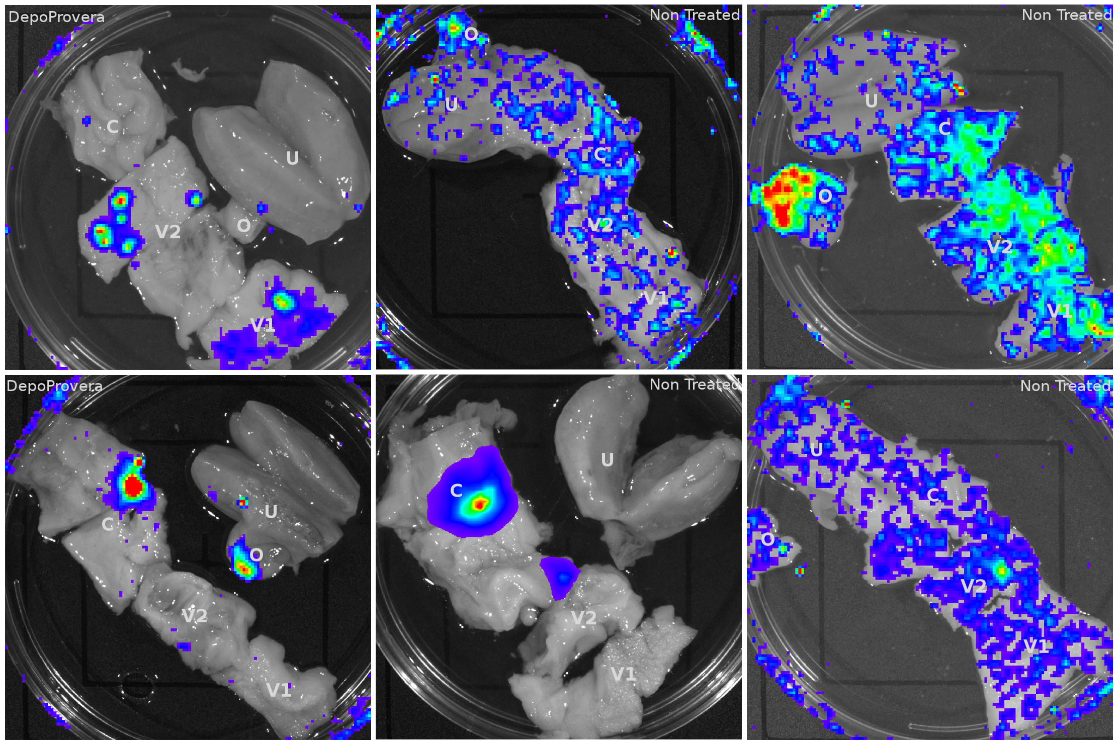 Luciferase reporter expression throughout the female reproductive tract in VSV-G pseudotyped vector inoculated Rhesus Macaques.