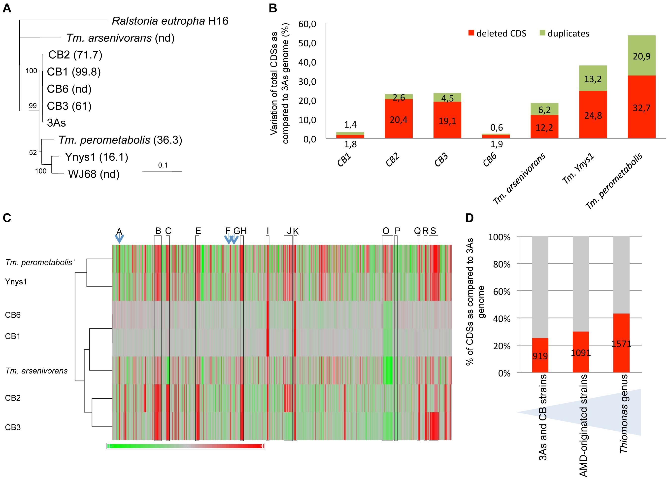 Genomic diversity among <i>Thiomonas</i> strains.