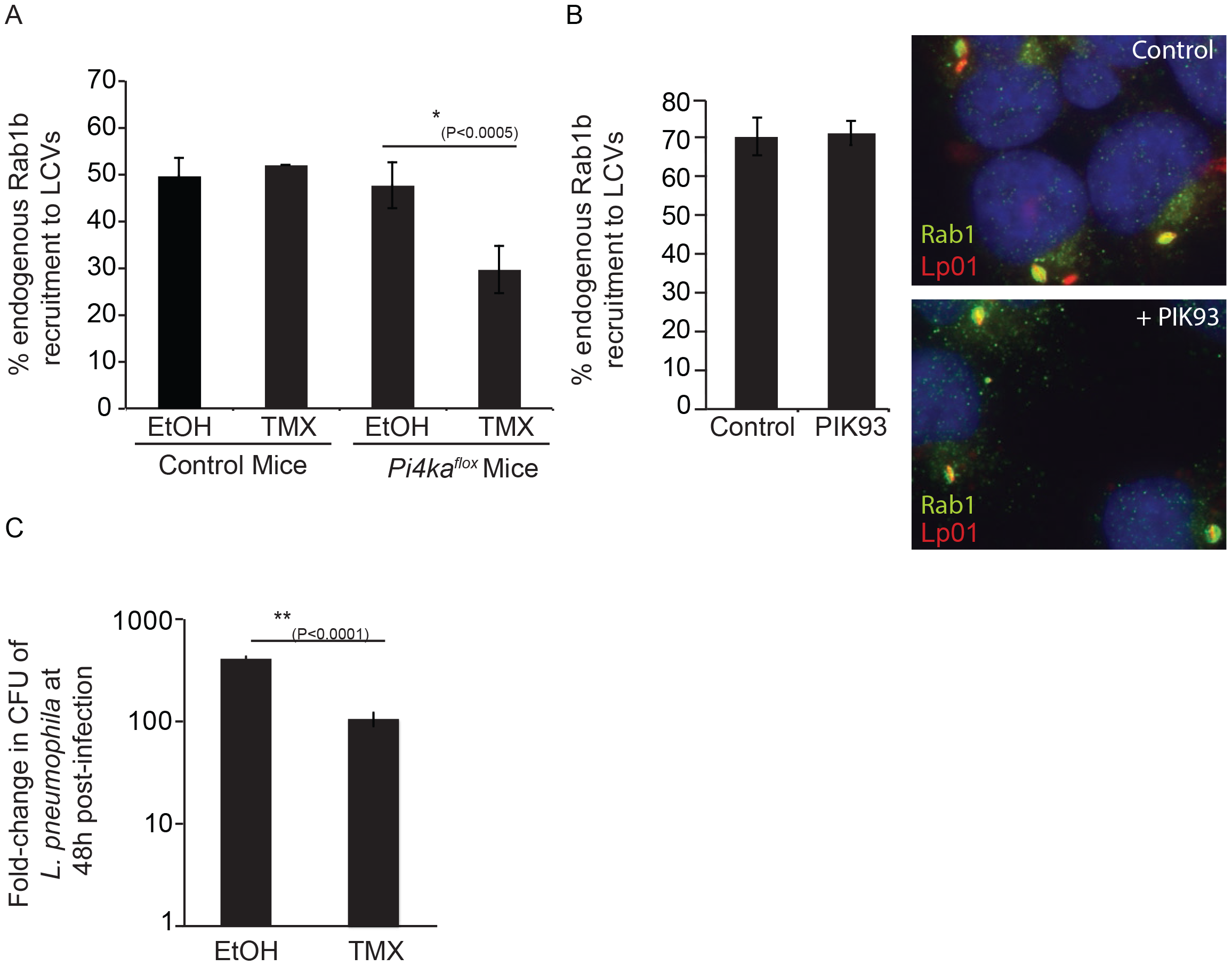 Influence of PI4KIIIα knockout on DrrA-mediated recruitment of Rab1b to LCVs in bone-marrow derived macrophages (<i>BMM</i>).