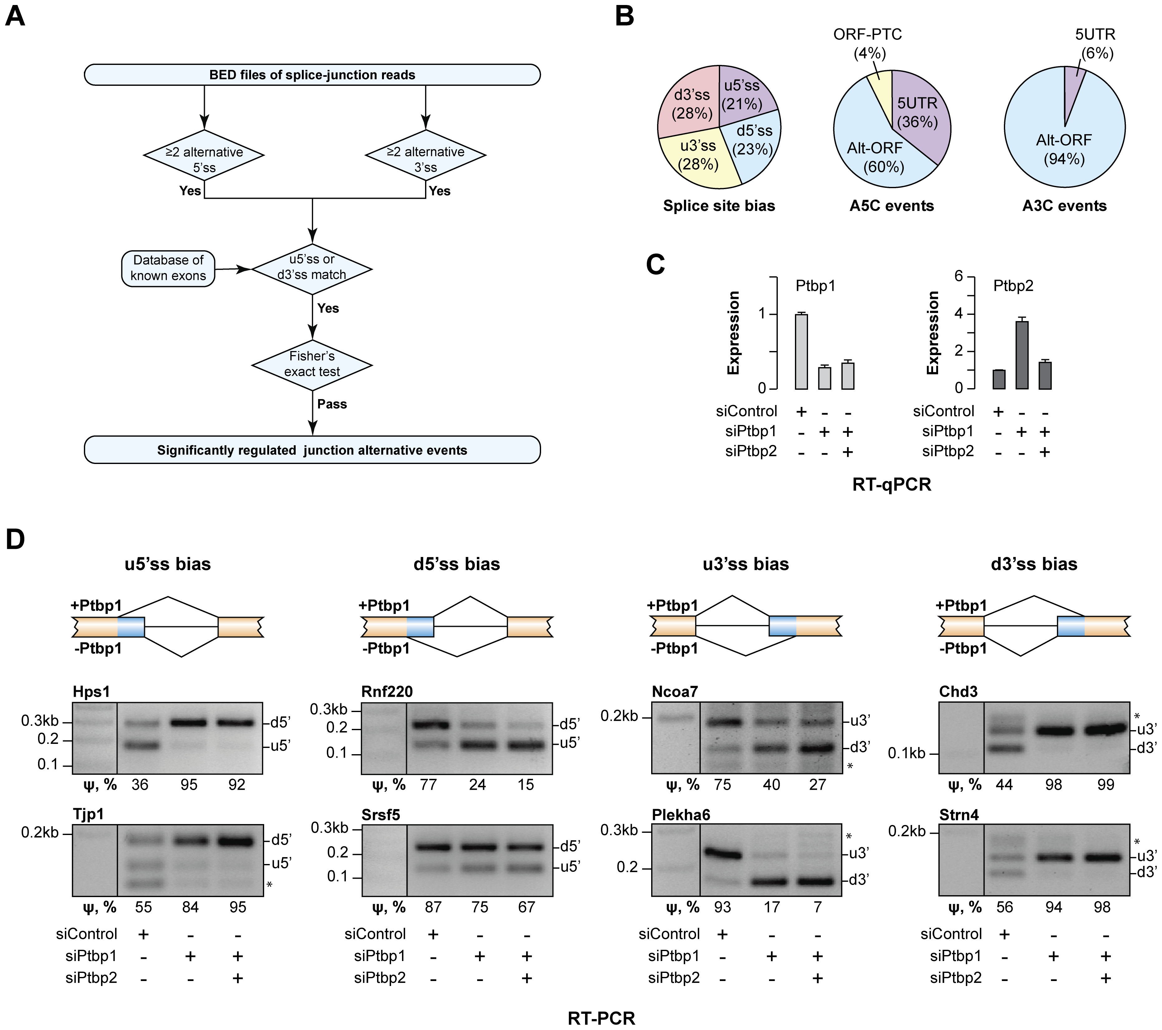 Ptbp1 regulates the choice between alternate 5′ and 3′ splice sites for an extensive set of genes.