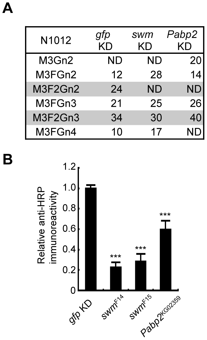 Swm and Pabp2 are required for neural-specific α1,3-fucosylation.