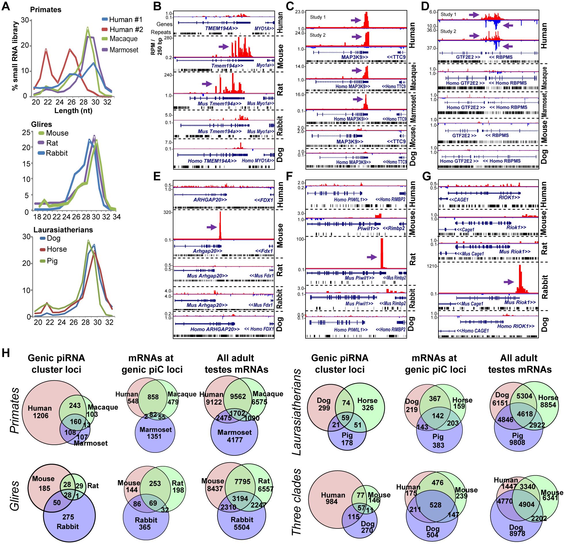 Rapid evolution of genic piC loci piRNA expression in mammals.