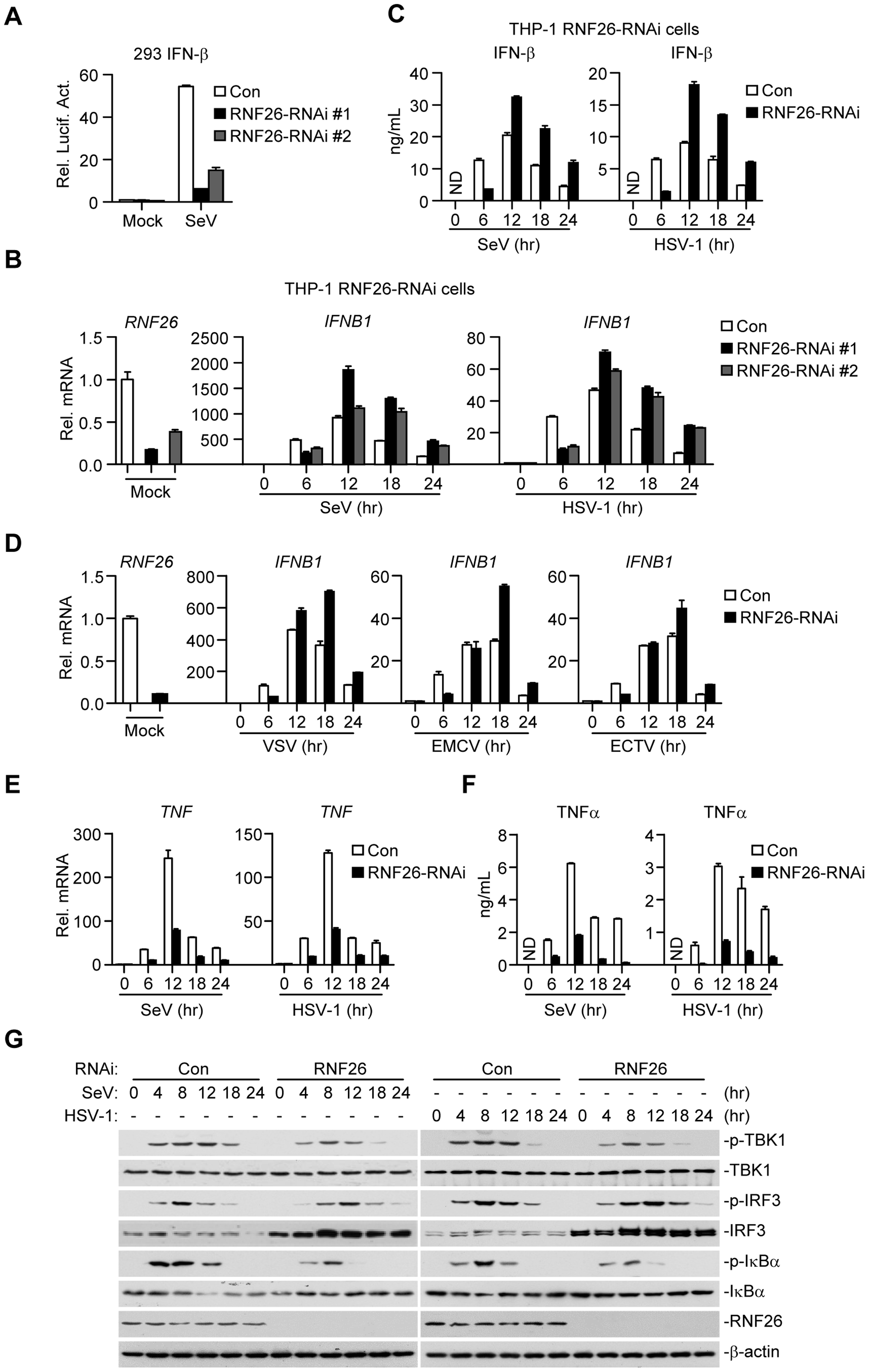 RNF26 modulates virus-triggered induction of type I IFNs.