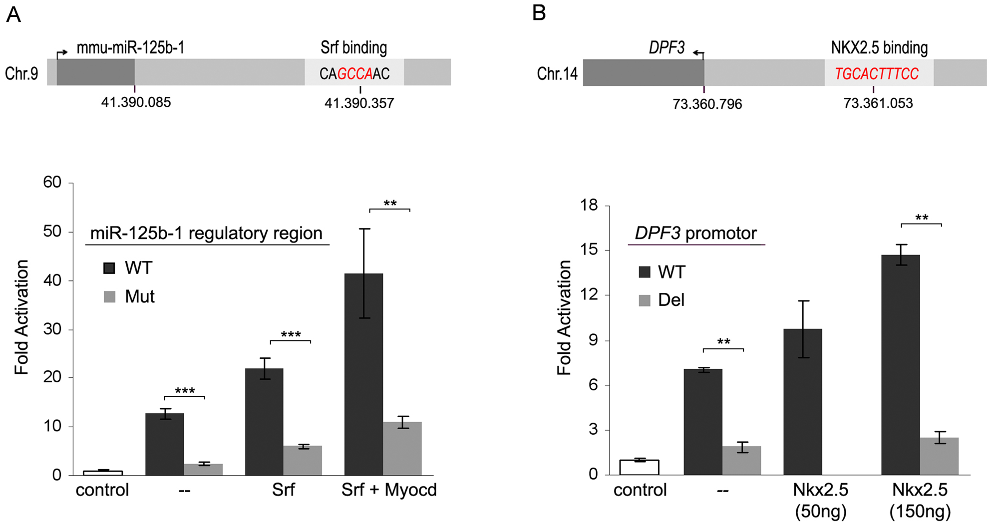 Promoter analysis of miR-125b-1 and <i>DPF3</i>.