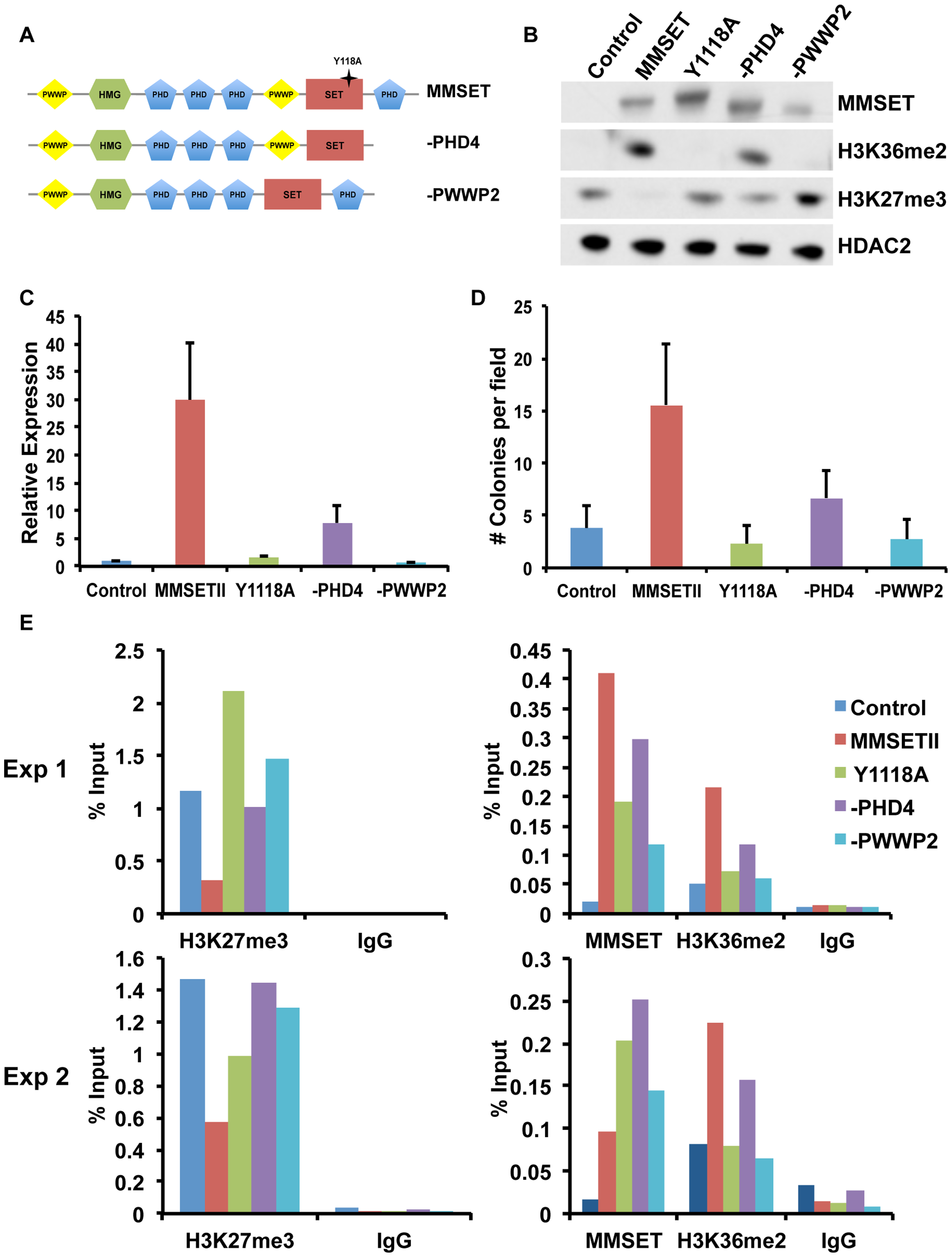 The MMSET-induced epigenetic switch depends on multiple domains.