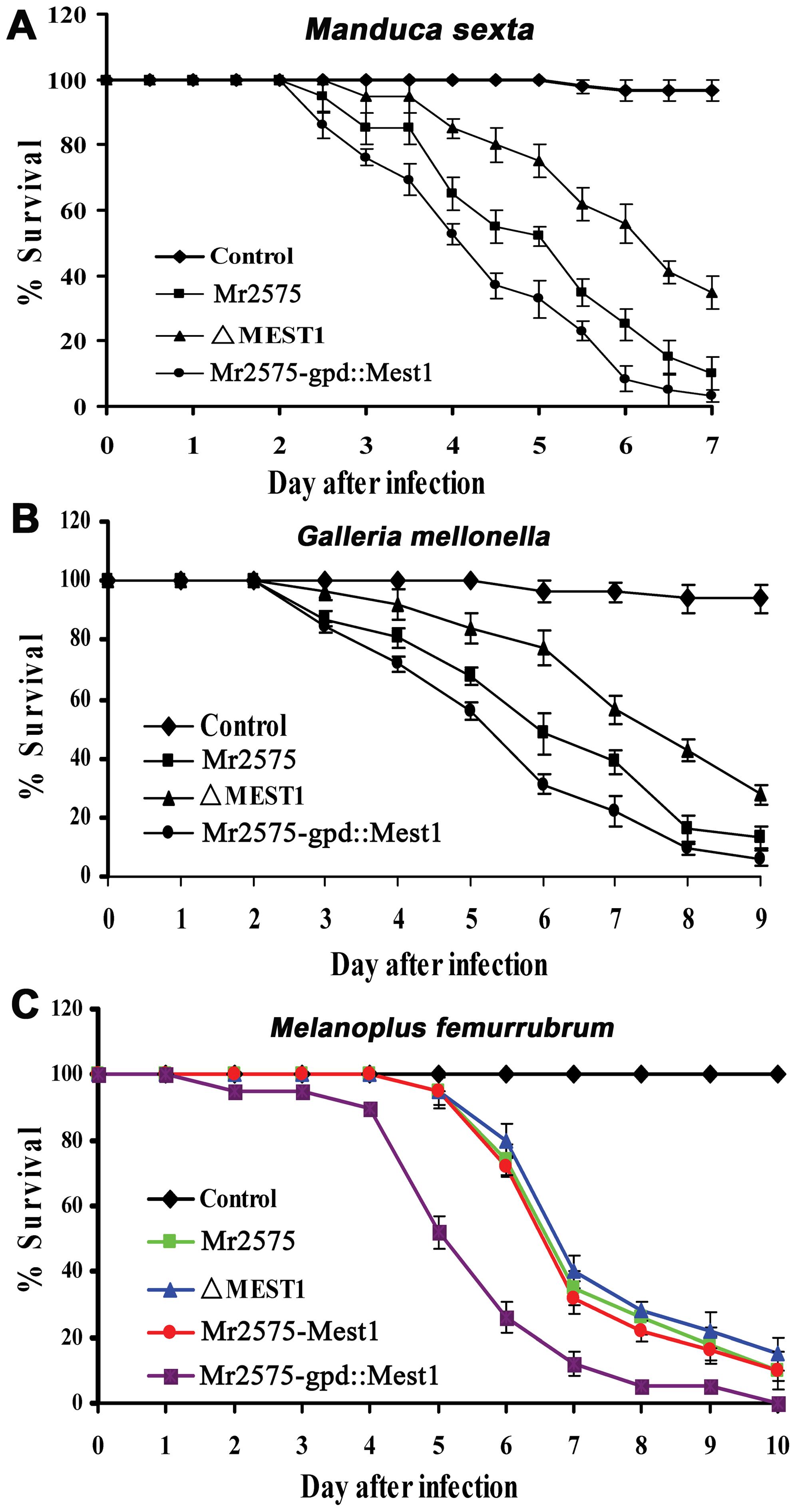 Pathogenicity of <i>Metarhizium robertsii</i> strains.