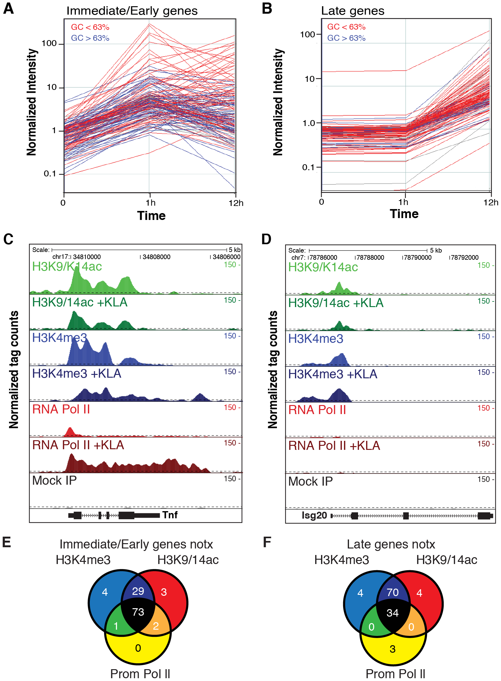 Immediate/early (I/E) and late genes exhibit characteristics of actively transcribed genes under basal conditions.