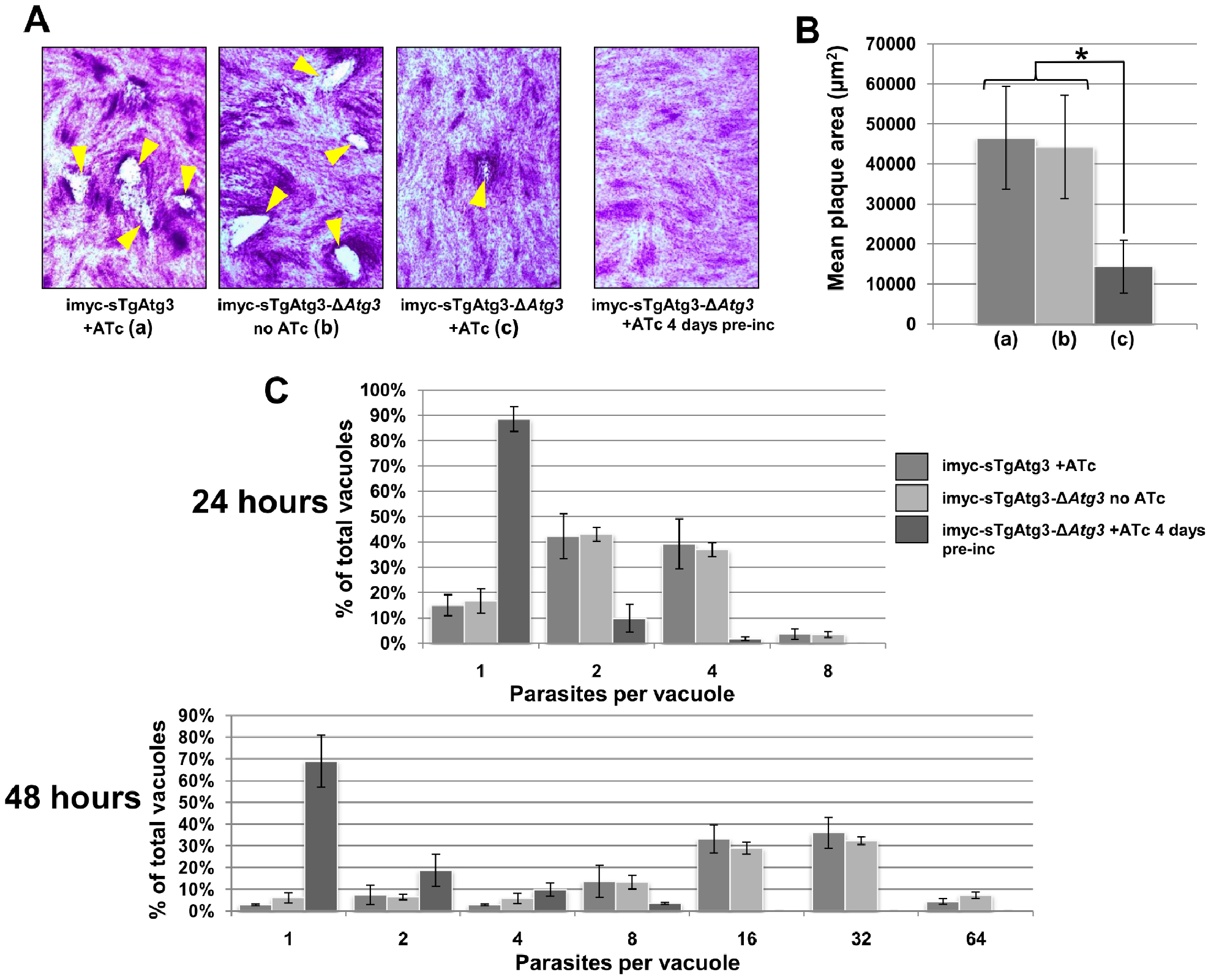 Depletion of TgAtg3 causes a growth defect for intracellular tachyzoites.