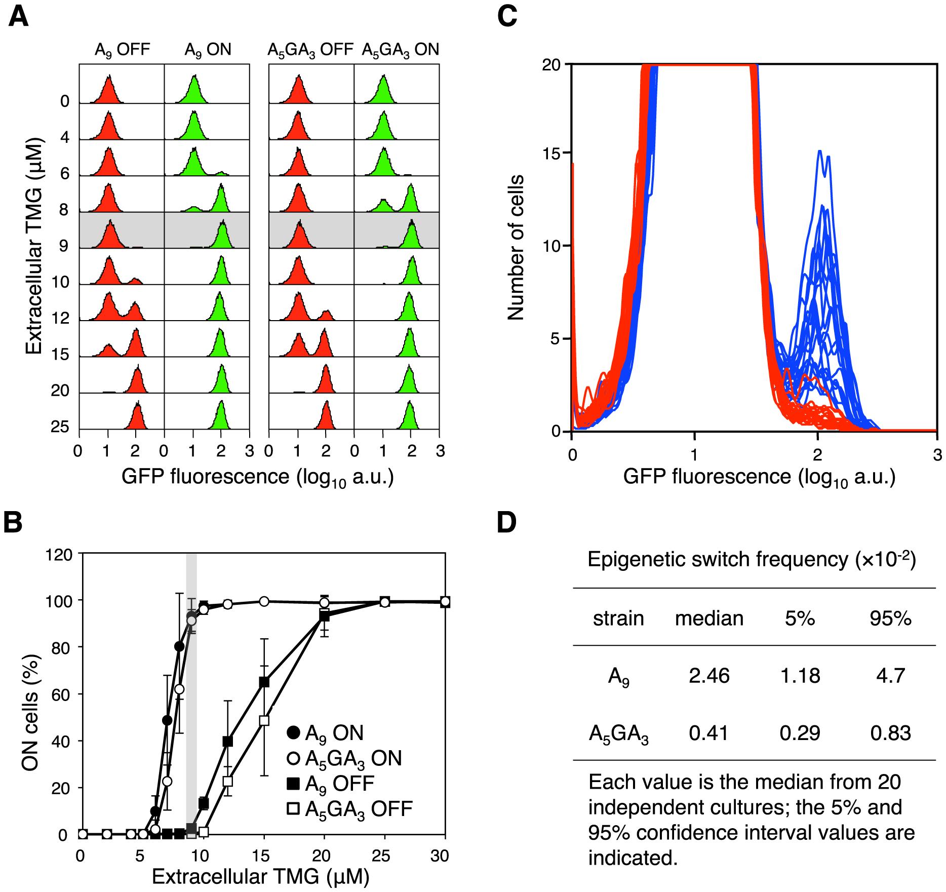 The error-prone A<sub>9</sub> run in the <i>lacI</i> transcript increases stochastic phenotypic switching.
