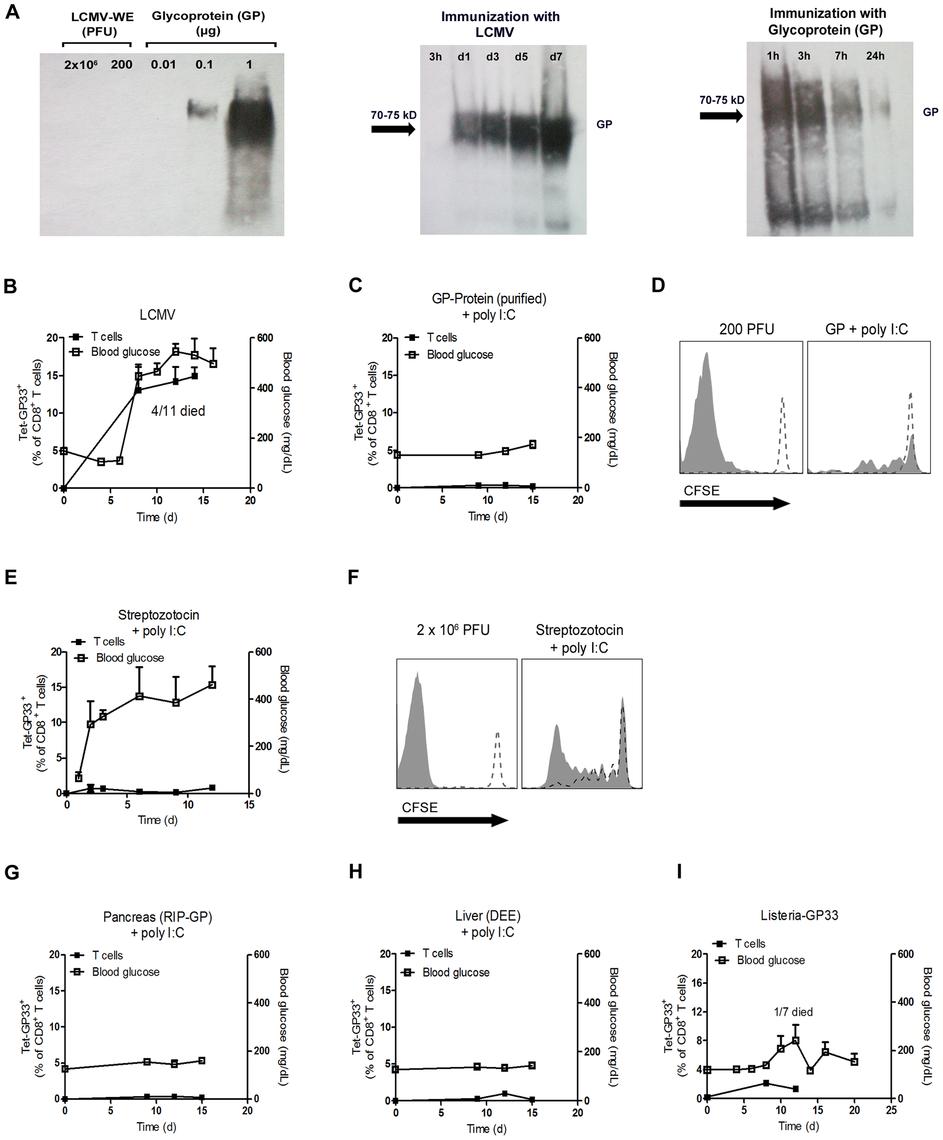 Only replicating antigen is efficient in breaking autoimmune tolerance.