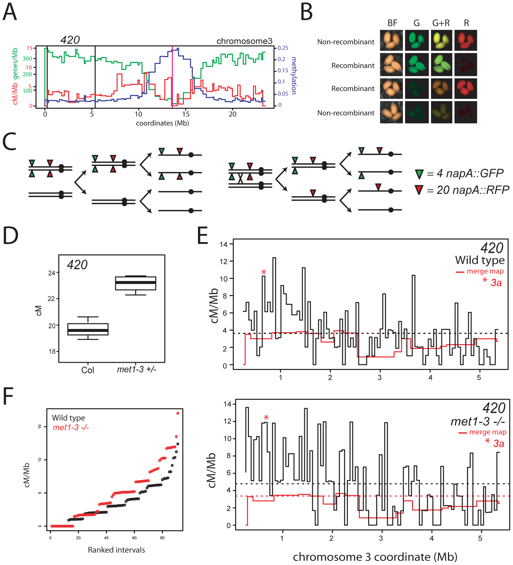 Elevated euchromatic recombination topology in wild type and <i>met1–3.</i>