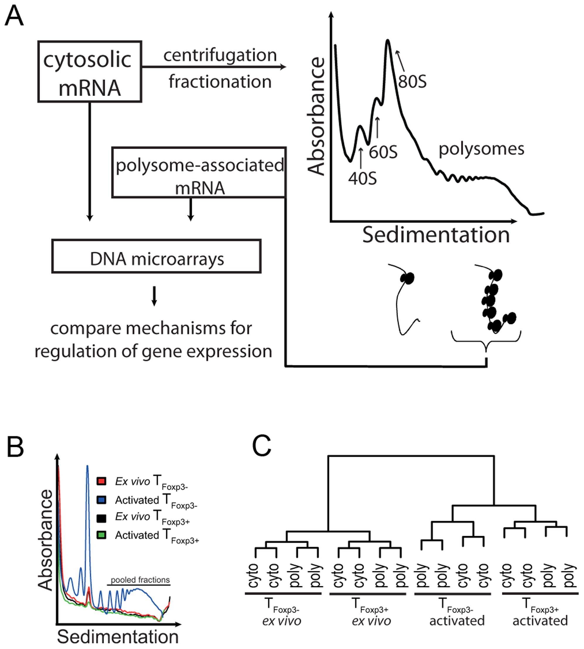 Genome-wide analysis of translationally regulated mRNAs in primary CD4<sup>+</sup> T cell subsets.