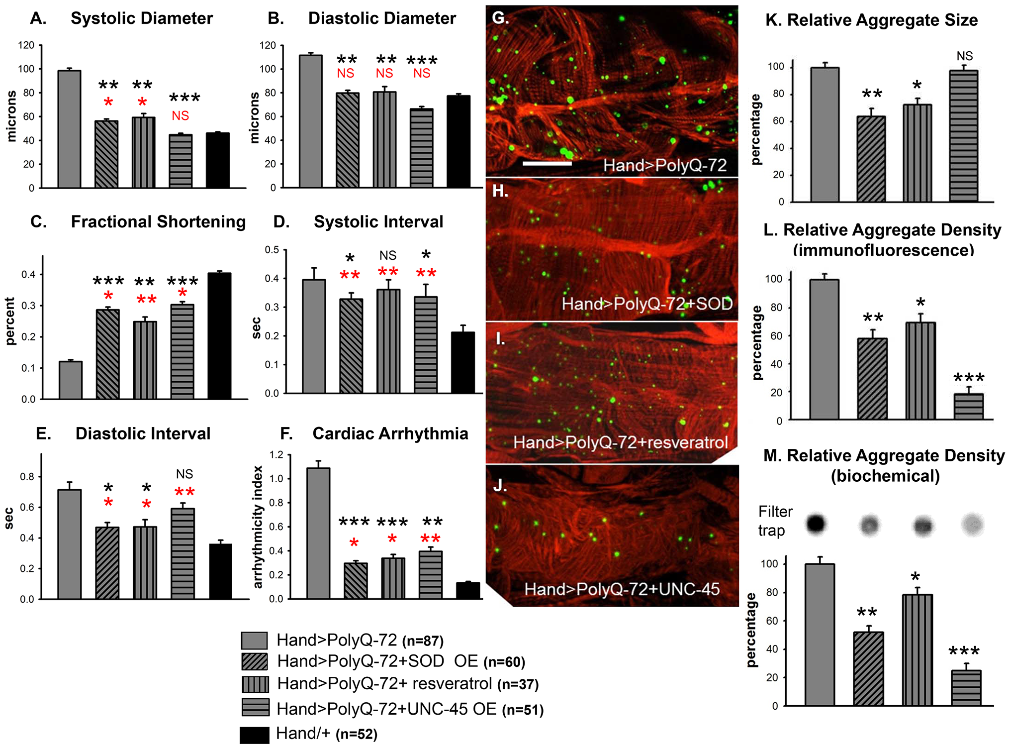 Over-expression of SOD or treatment with resveratrol or over-expression of UNC-45 all rescue PolyQ-72 induced cardiac dysfunction to some extent.
