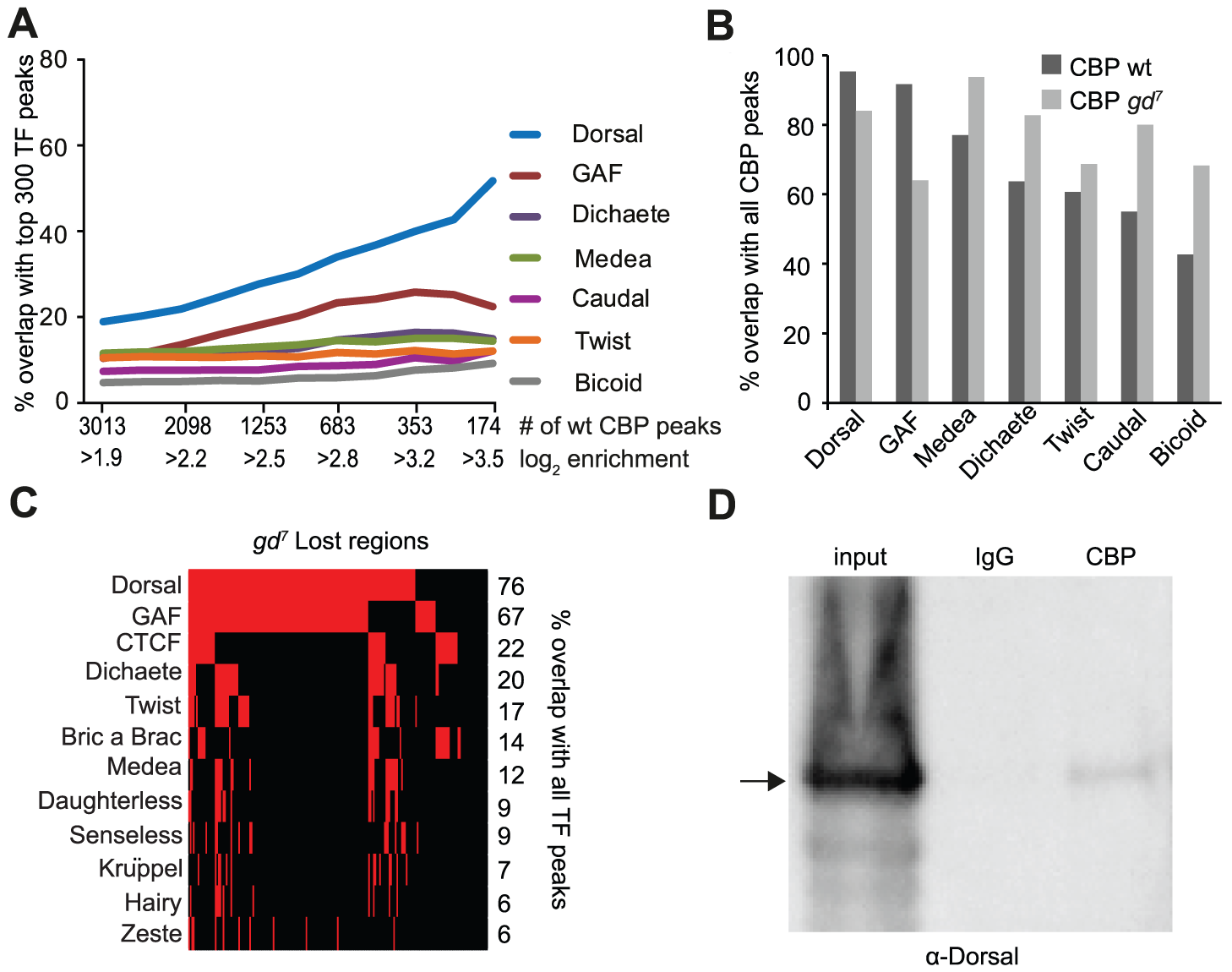 CBP and Dorsal co-occupy the genome more extensively than 39 other transcription factors in early <i>Drosophila</i> embryos.