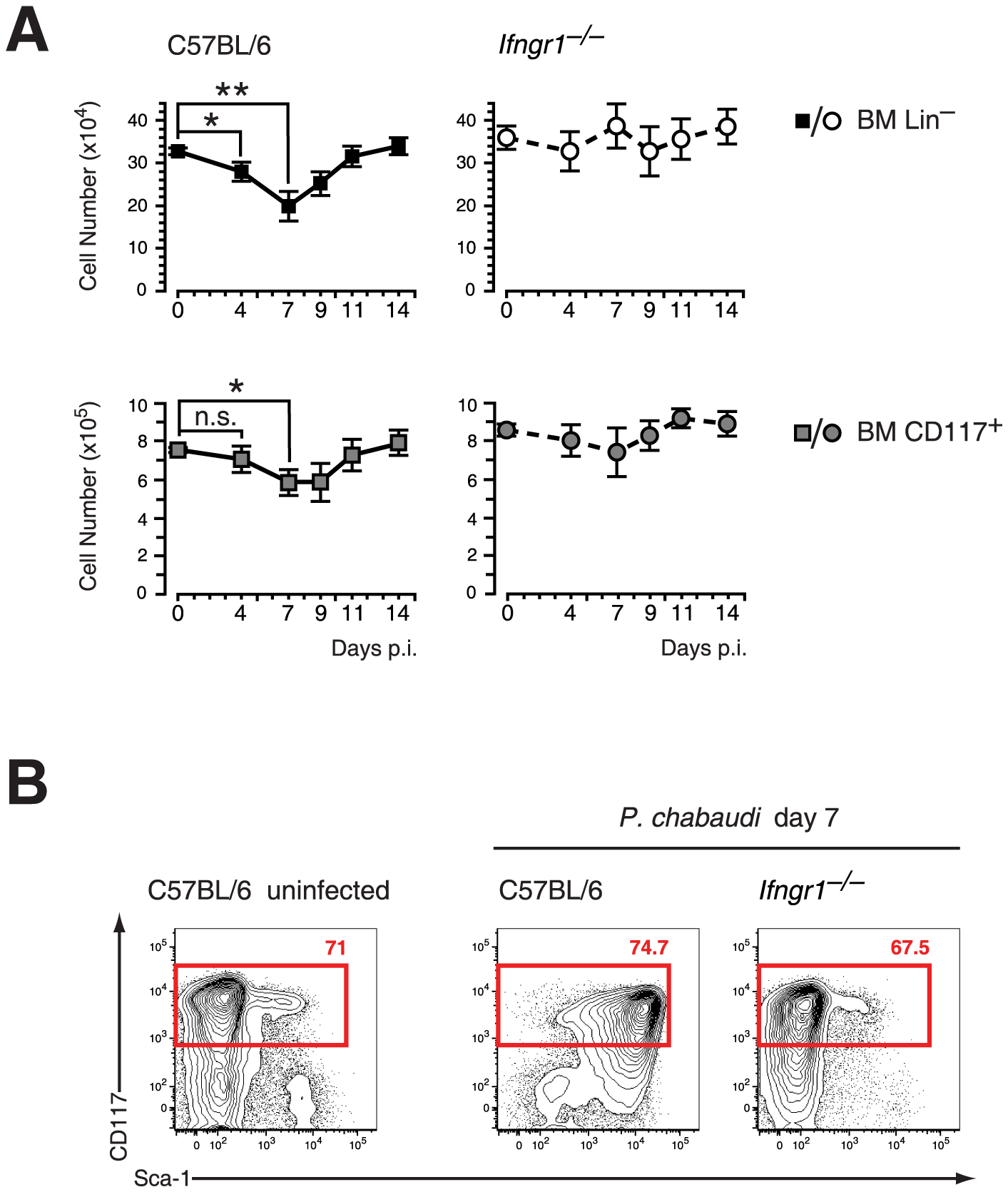 Contraction of lineage negative cell and Sca-1 upregulation in malaria are dependent on IFN-γ signaling.