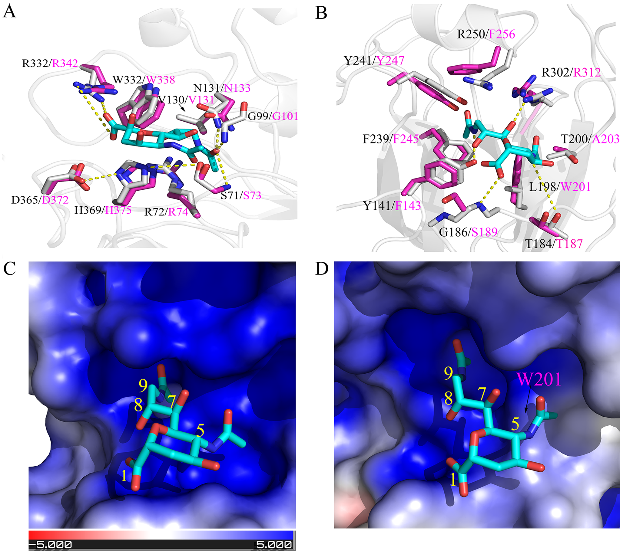 Structural comparisons of C/OK and human C HE receptor-binding pocket and substrate-binding site.