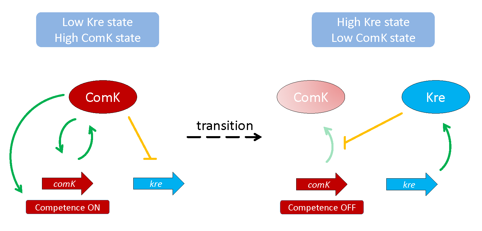 Feedback loops that control the bistable gene expression of genetic competence in <i>B</i>. <i>subtilis</i>.