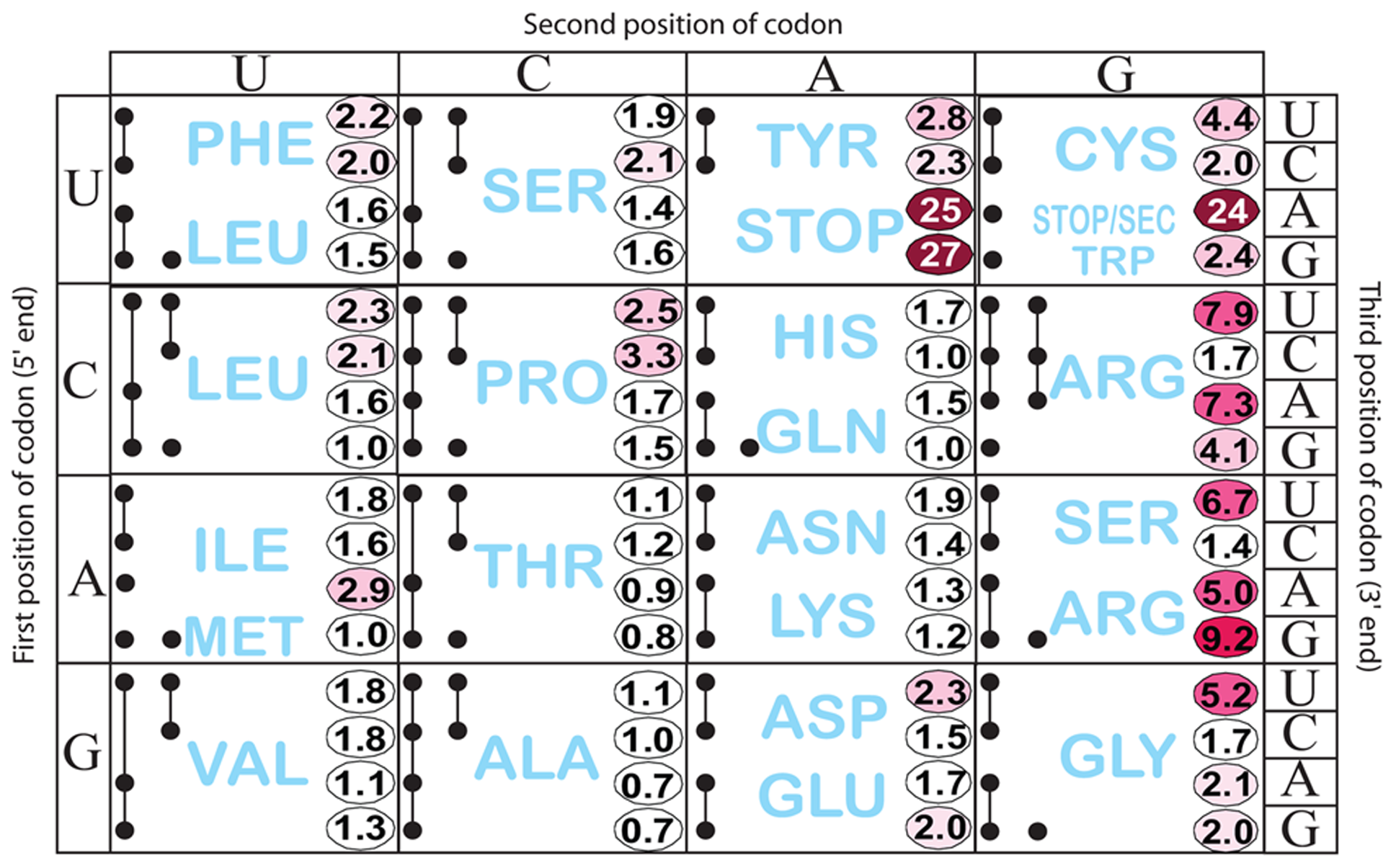 Histidine operon expression with His5 of the leader substituted by all 64 codons.