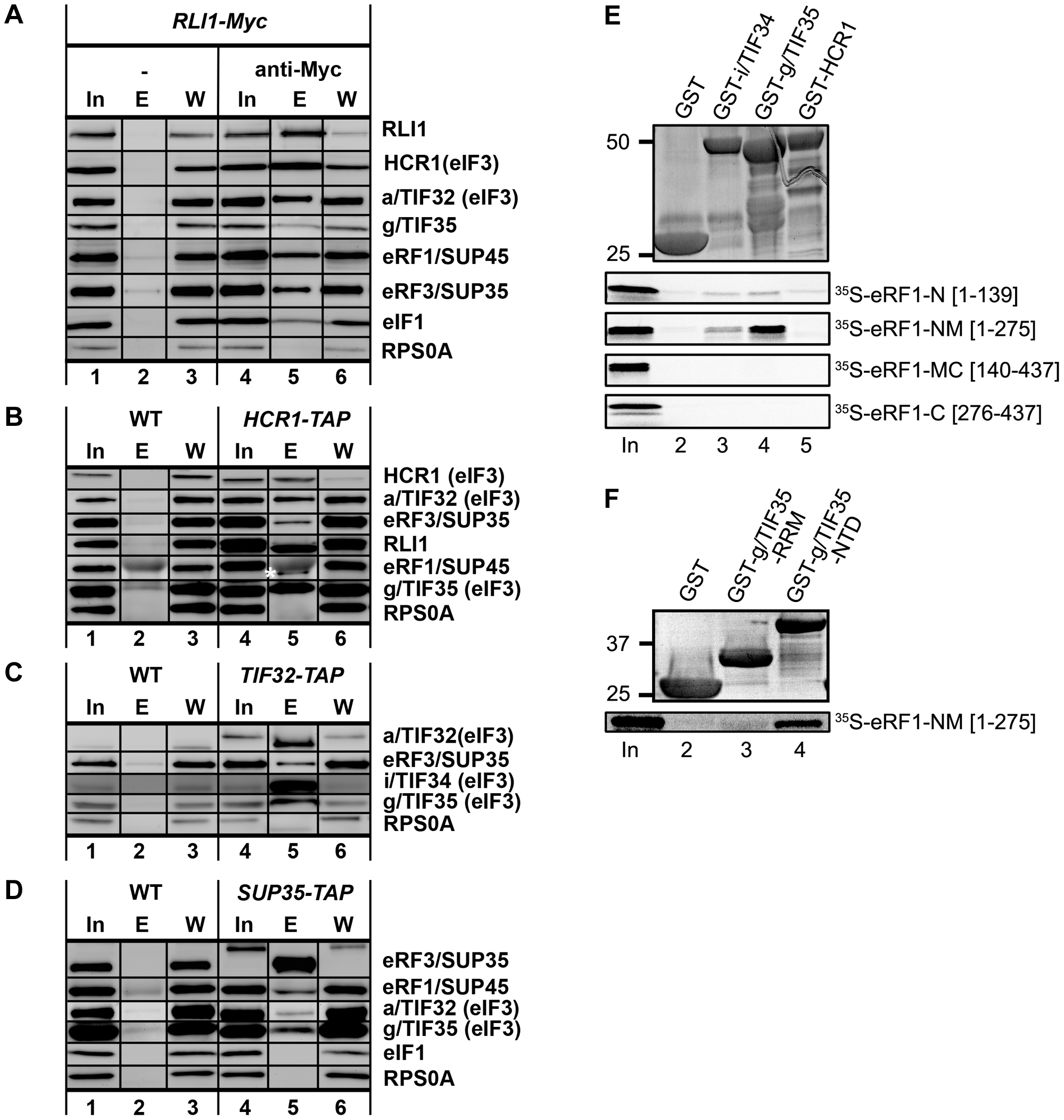 Complexes containing eIF3, HCR1, ABCE1/RLI1 and both eRFs, free of ribosomes and RNA, occur <i>in vivo</i>; and the NTD of g/TIF35 and i/TIF34 directly interact with the N and M domains of eRF1.