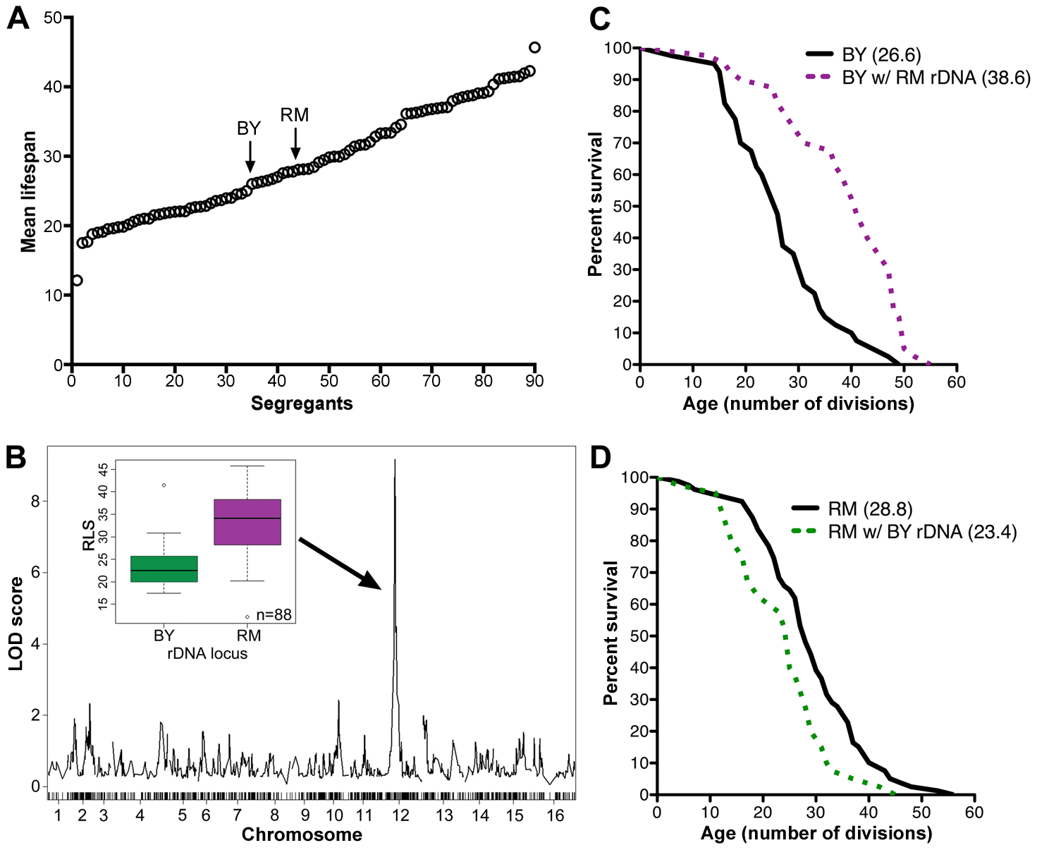 rDNA is the major regulator of replicative lifespan in the RM/BY cross.