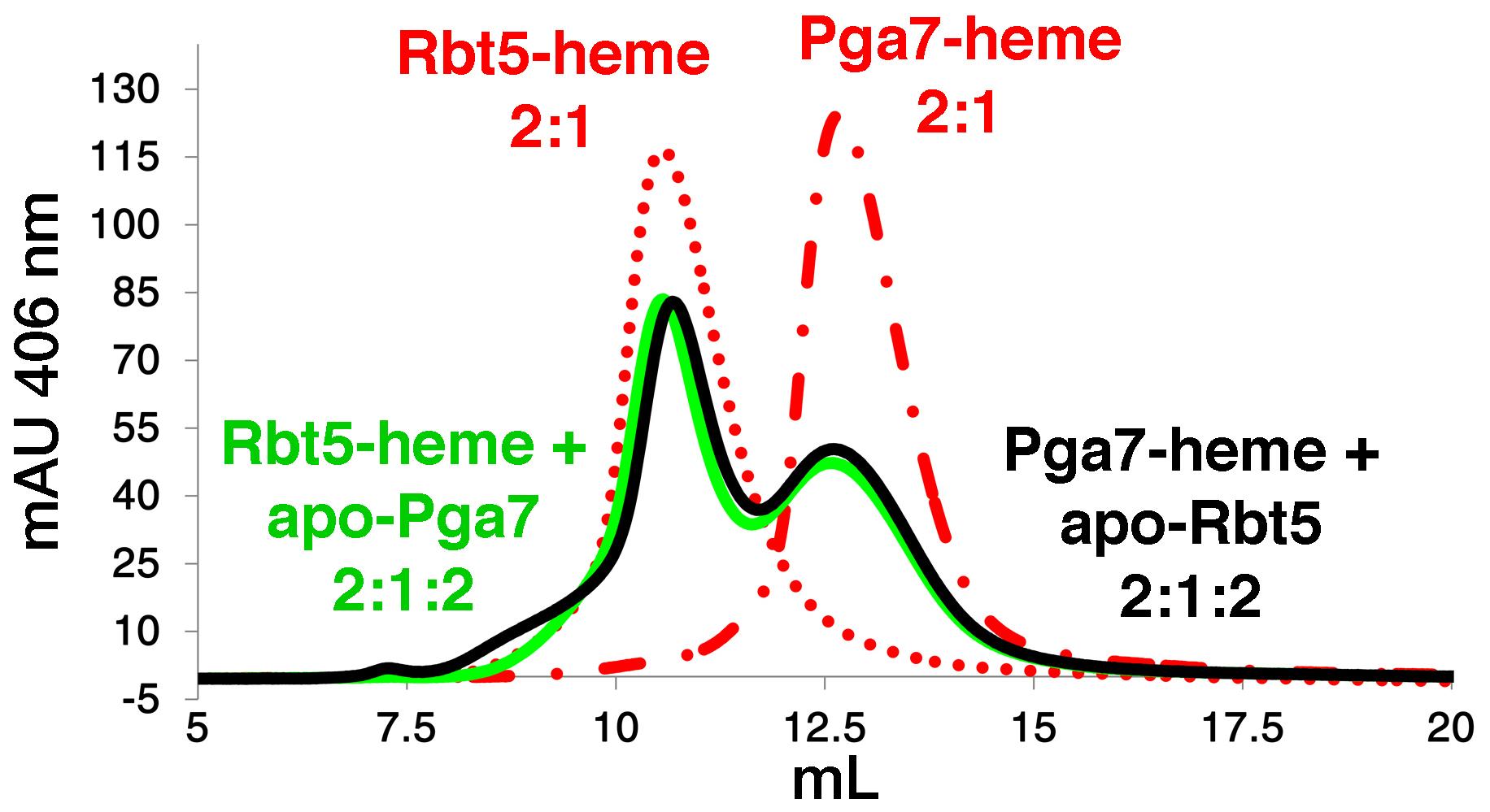Transfer of heme between Rbt5 and Pga7.