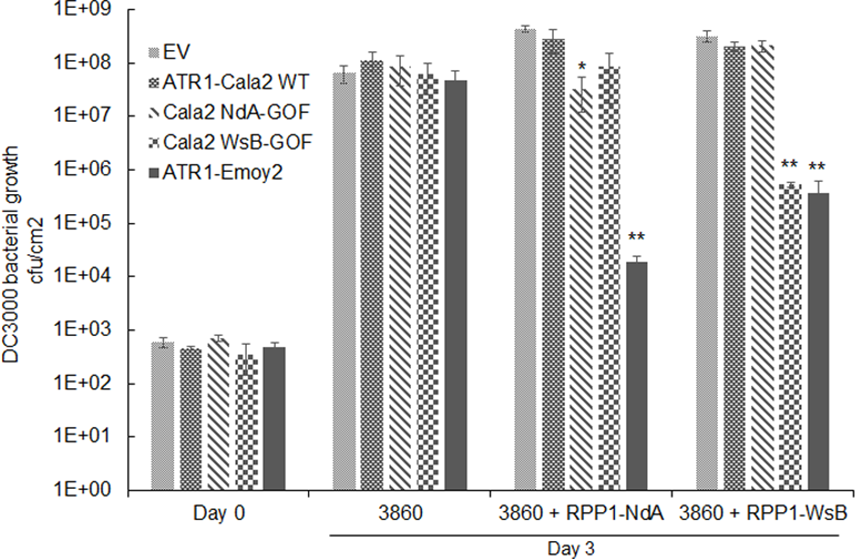 Delivery of alleles and mutants of ATR1 by <i>Pseudomonas syringae</i> pv. <i>tomato</i> strain DC3000 leads to allele specific growth inhibition.