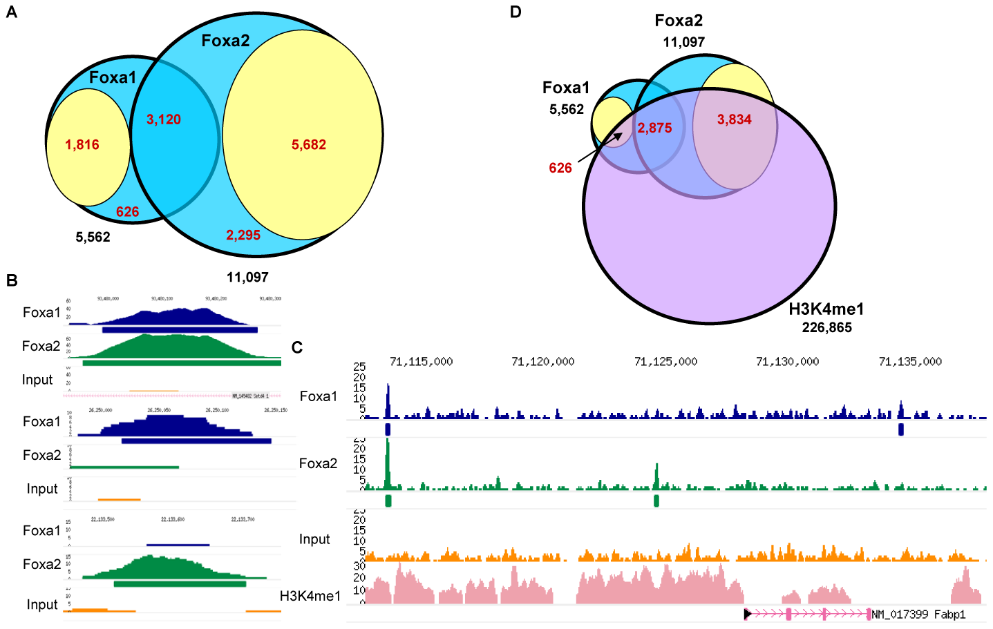 Identification of Genomic Targets of Foxa1 and Foxa2 in Adult Liver.