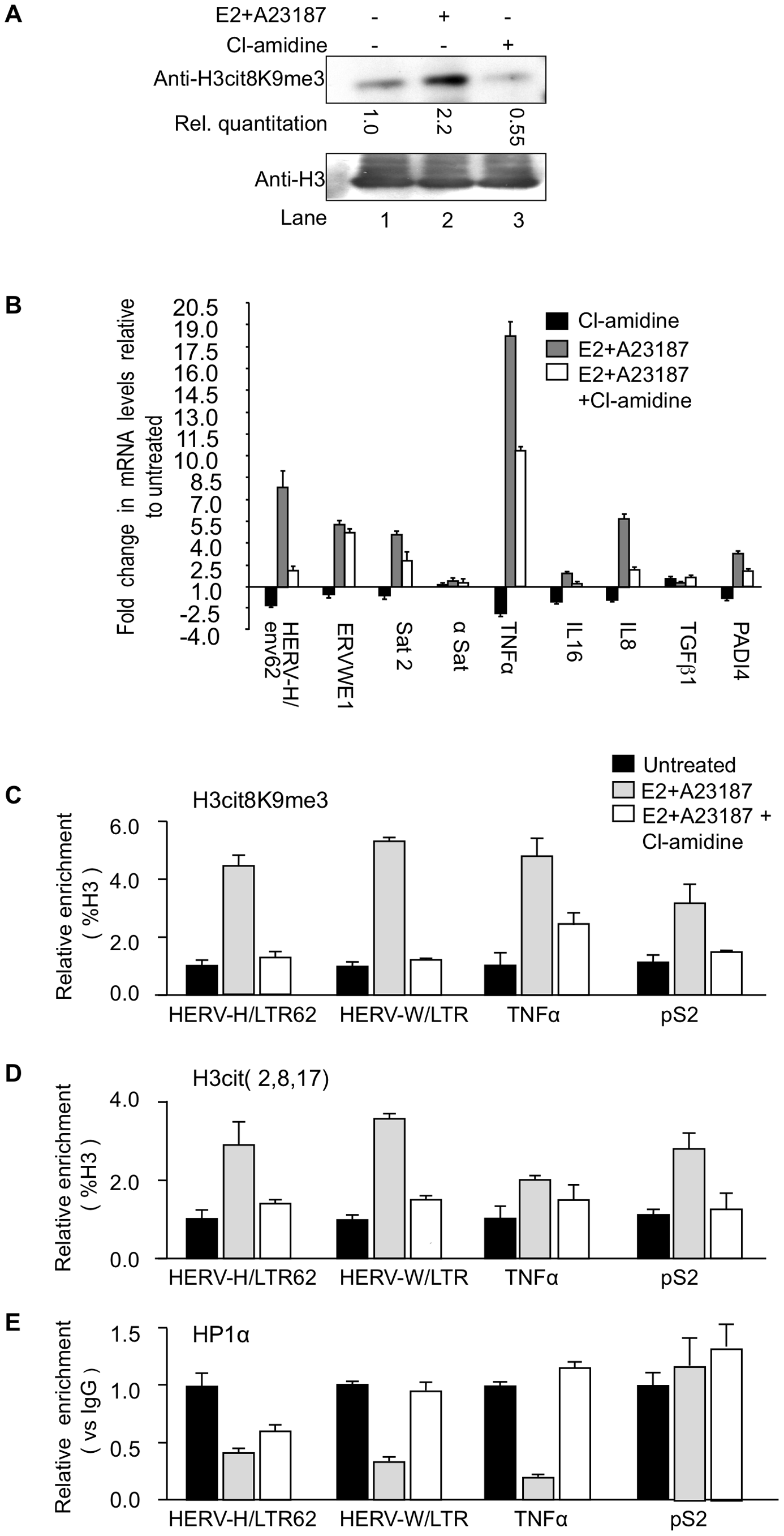 PADI4 activity controls HP1α occupancy and histone H3 citrullination at TNFα and HERV promoters.