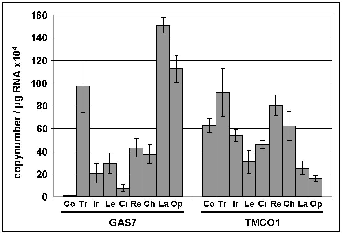 Expression levels of GAS7 and TMCO1 in human ocular tissues.