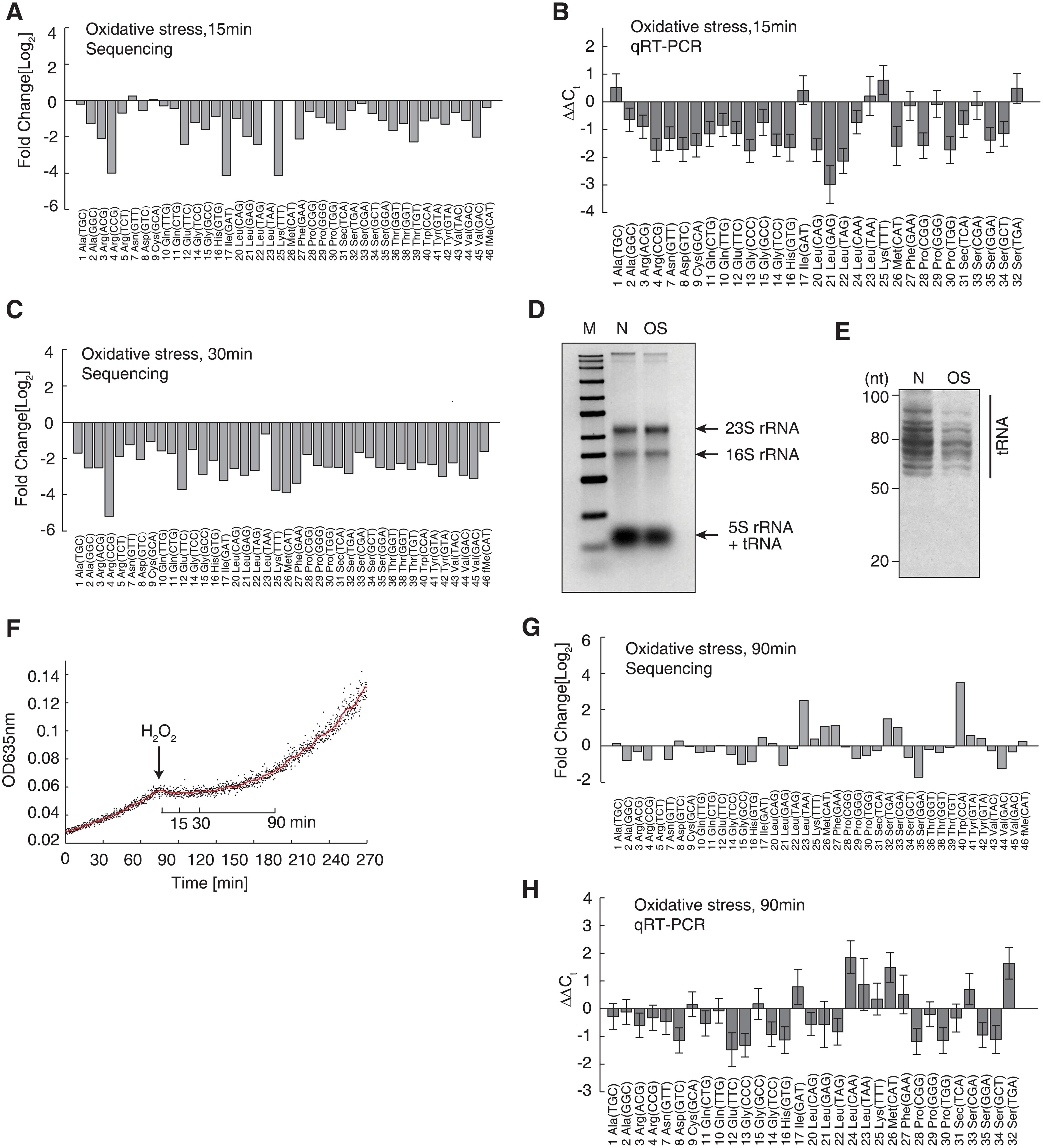 Decrease of full-length tRNAs under oxidative stress.