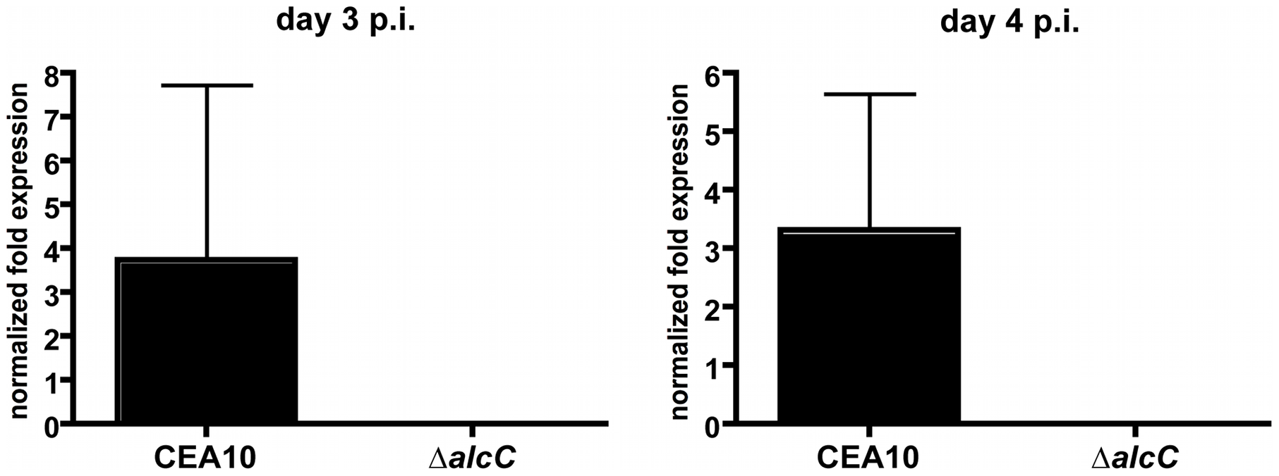 Normalized fold expression of the <i>A. fumigatus alcC</i> gene <i>in vivo</i> during fungal pathogenesis.