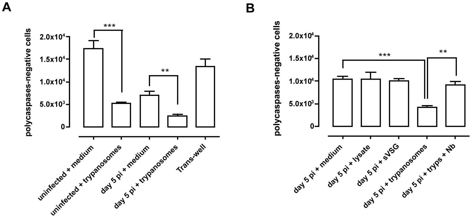 <i>In vitro</i> co-culture of total spleen cells and trypanosomes.