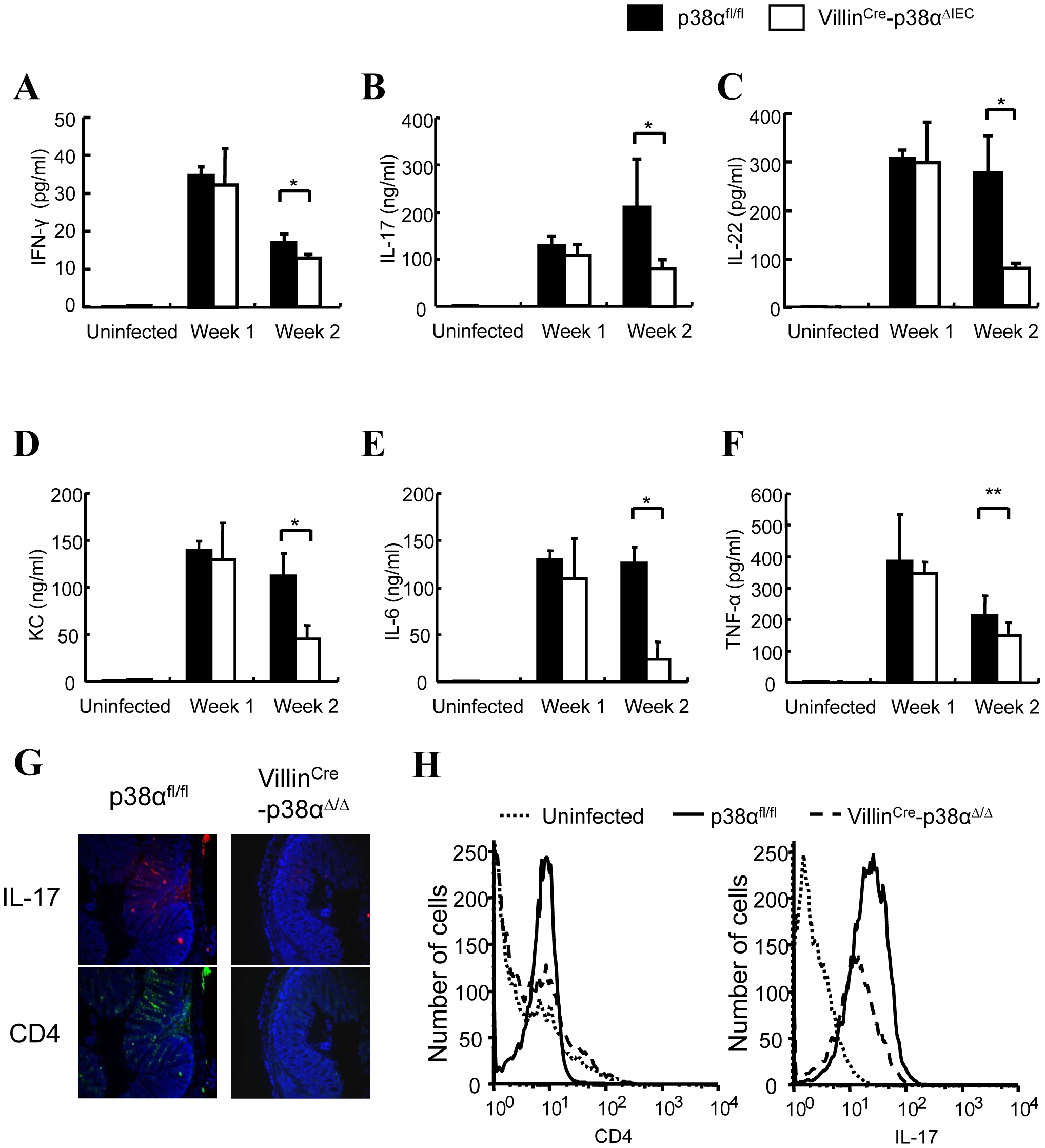 Cytokine expressions in the colon of VillinCre-p38α<sup>ΔIEC</sup> mice are impaired after <i>C. rodentium</i> infection.