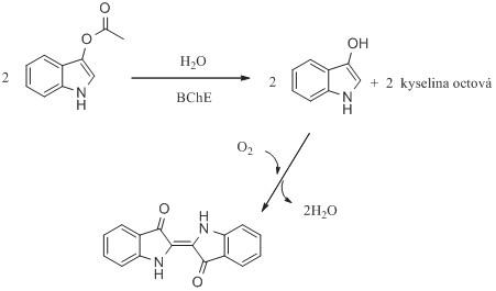 Stanovení aktivity cholinesteras za využití indoxylacetátu jako fluorogenního a chromogenního substrátu. Reakční schéma je upraveno z citovaných prací <sup>61, 62)</sup>.
