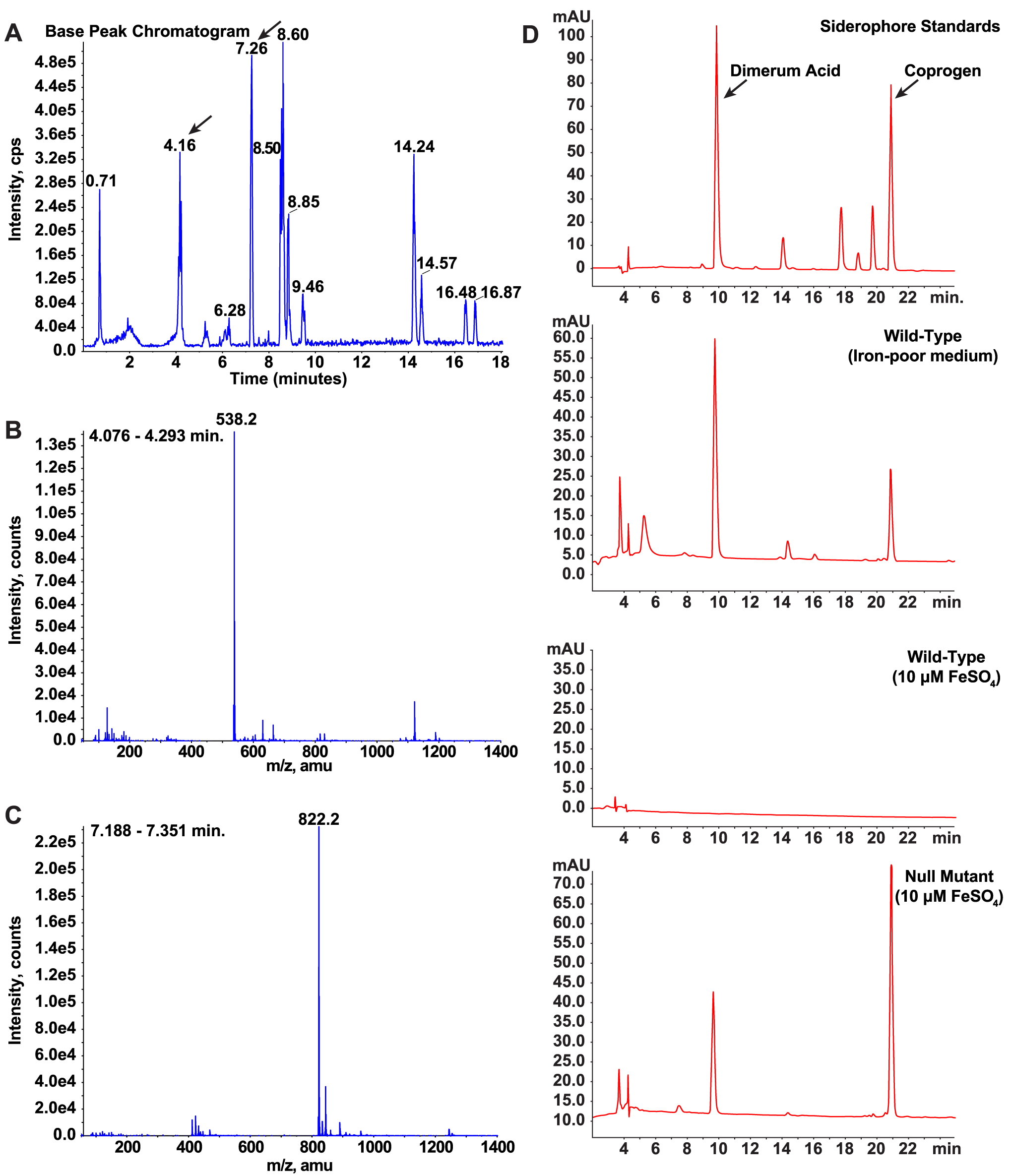 Identification and characterization of siderophores in <i>B. dermatitidis</i>.