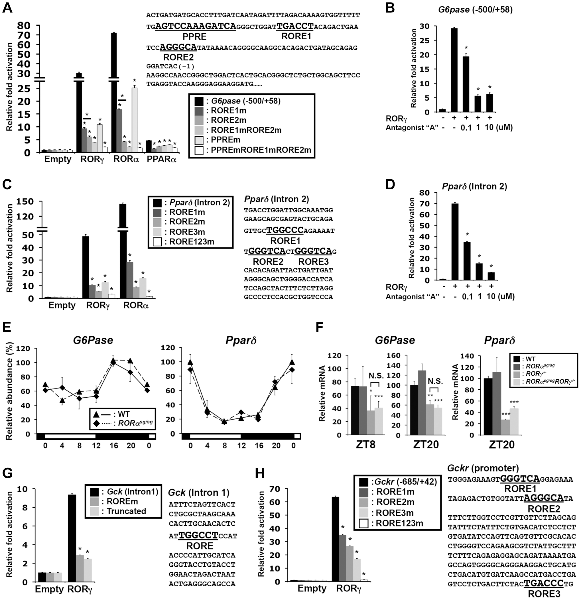Transcriptional regulation of glucose metabolic genes by RORγ.