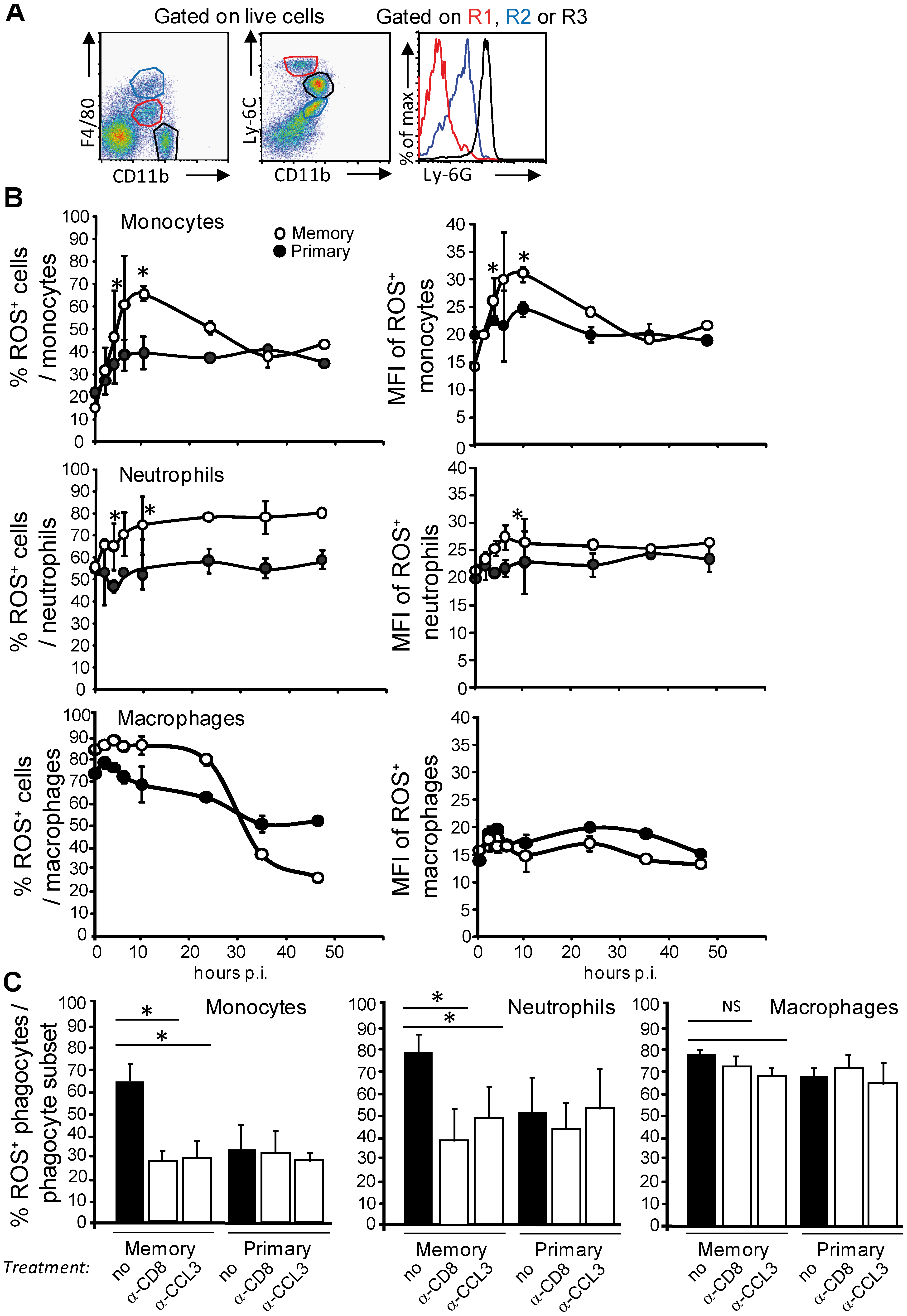 Increased frequencies of ROS<sup>+</sup> inflammatory monocytes and neutrophils that generate higher levels of ROS during the secondary infection.