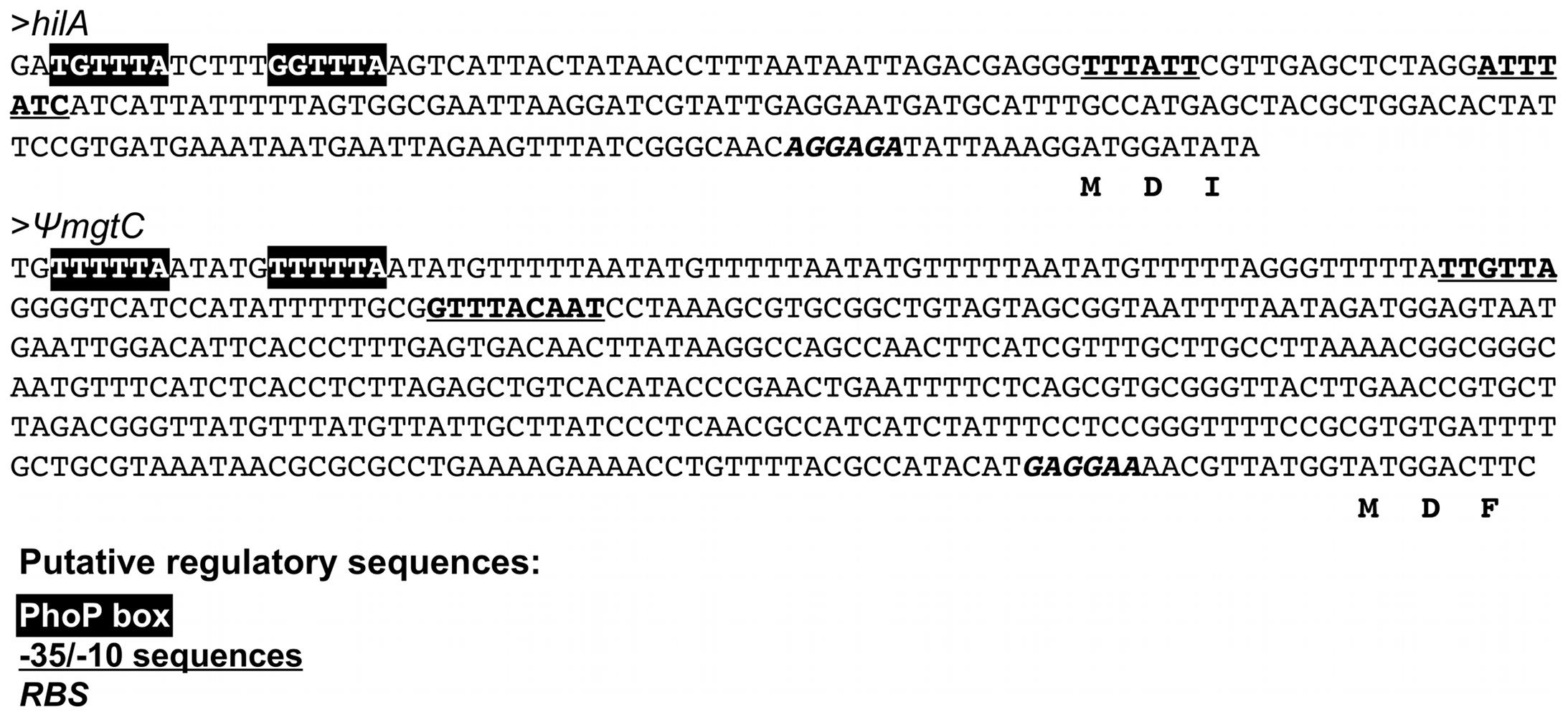 The putative promoter regions of the <i>S. glossinidius hilA</i> homologue and the <i>mgtCB</i> pseudo-operon contain canonical PhoP boxes.