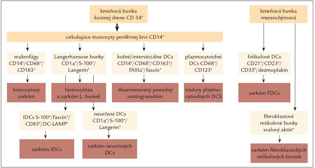 Schematické znázornenie hlavných typov nádorov histiocytových a dendritických buniek vo vzťahu k pôvodu nádorovej bunky.