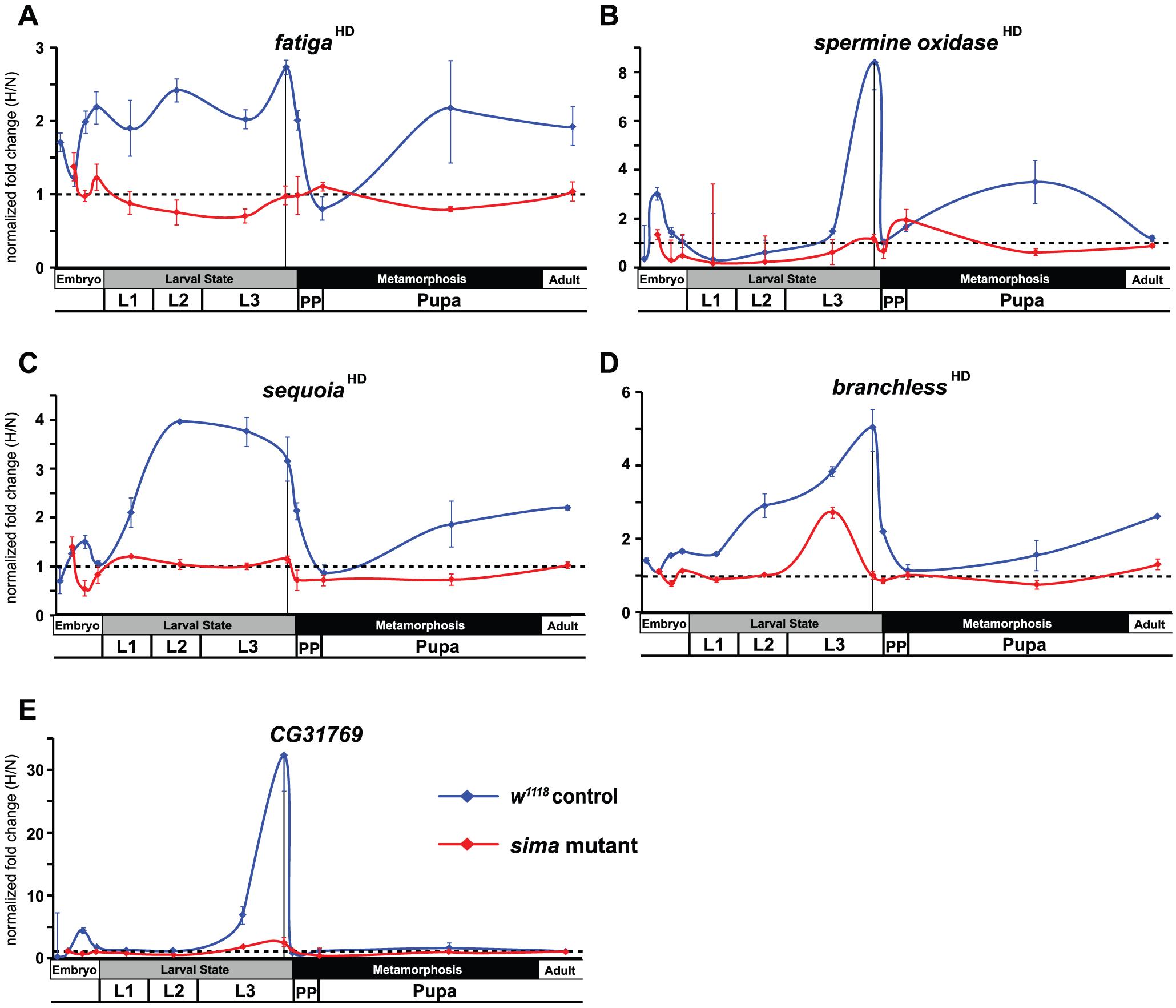 Temporal expression of HIF-dependent hypoxic response genes.