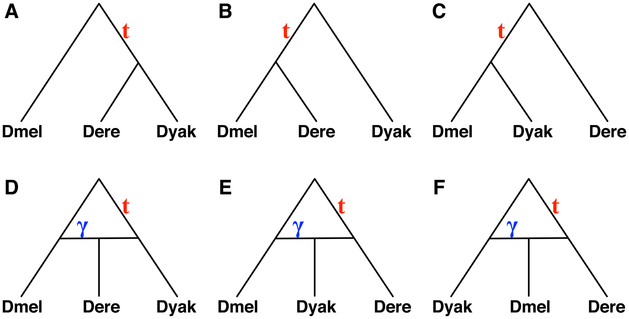 Six hypotheses for the evolutionary history of a <i>Drosophila</i> data set.