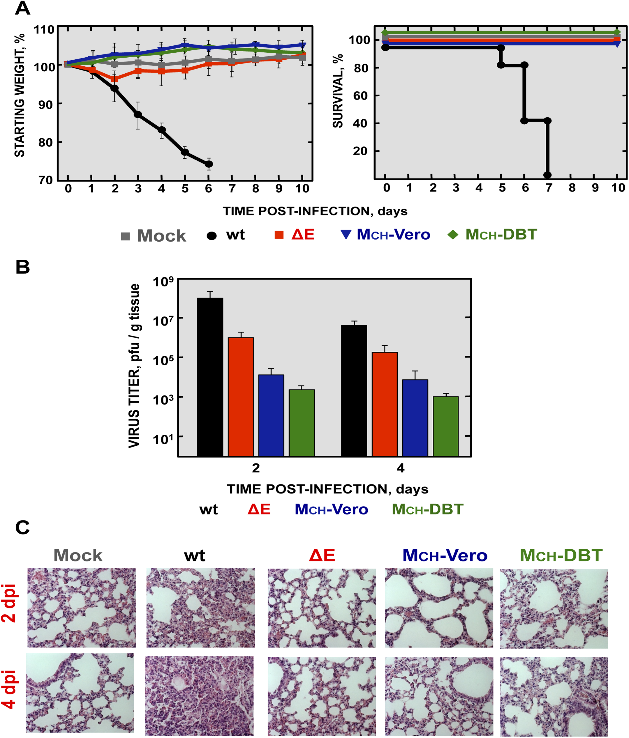 Virulence and viral growth of SARS-CoV-∆E after serial passage in cell culture.