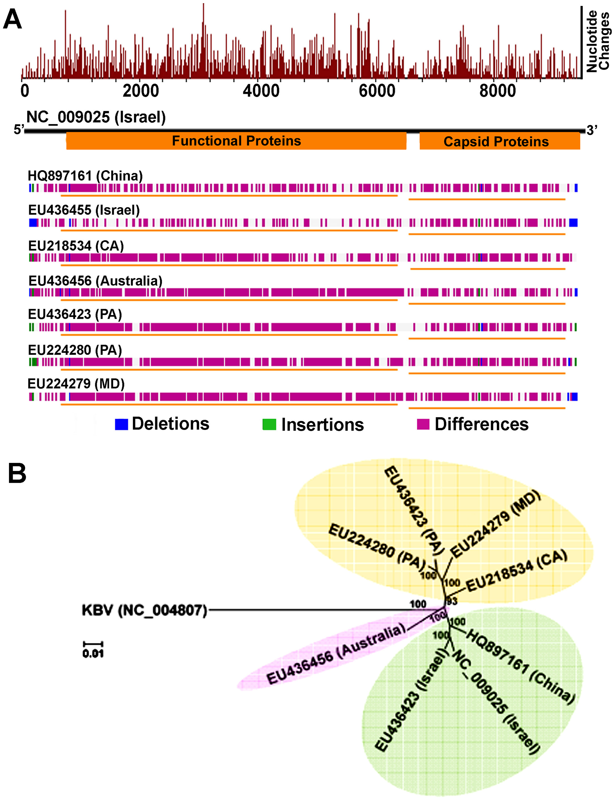 Genome-wide sequence diversity and phylogenetic relationship of IAPV isolates.