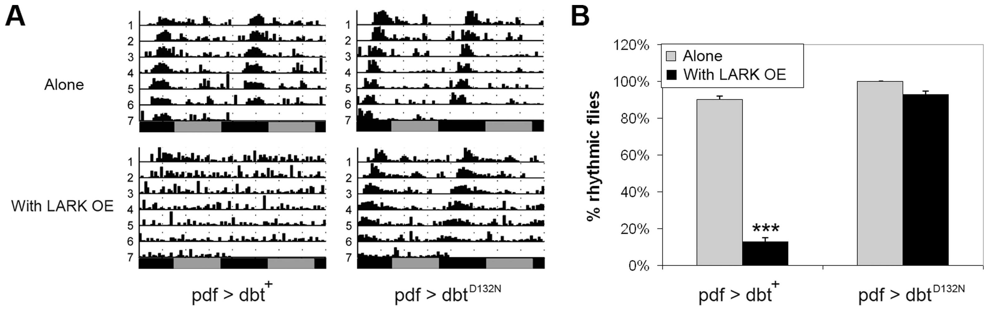 DBT kinase activity is required for the LARK OE phenotype.