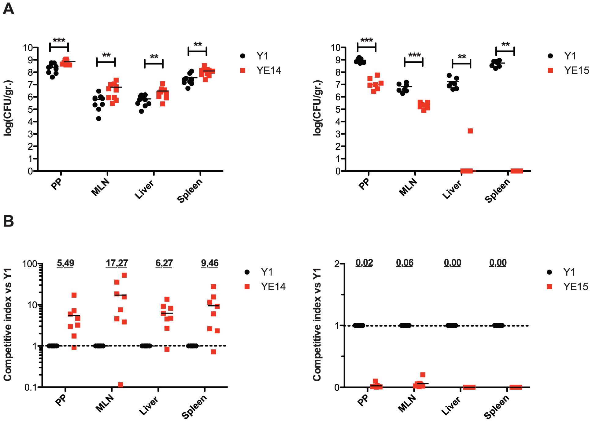 Influence of enhanced invasin and RovA levels on <i>Y. enterocolitica</i> O:3 virulence.