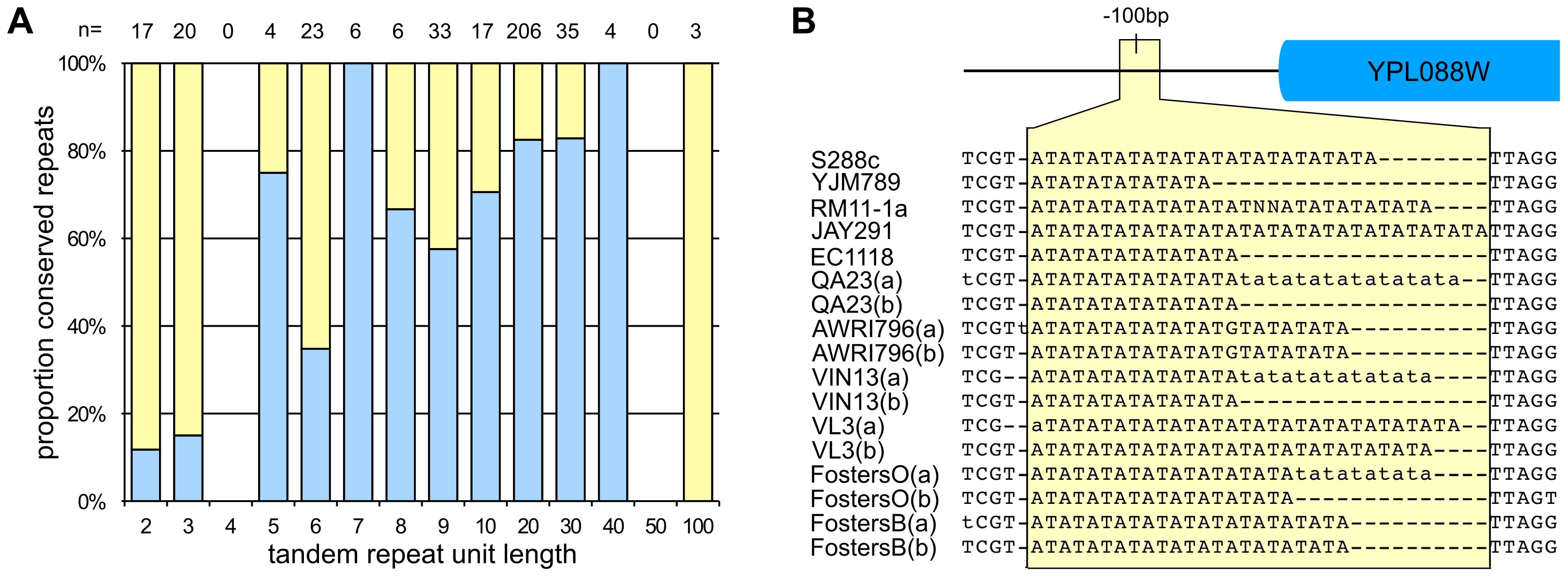 Nucleotide variation in <i>S. cerevisiae</i>.