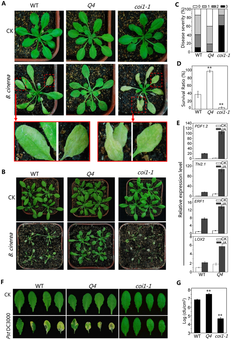 The bHLH subgroup IIId factors negatively regulate JA-mediated plant defense.